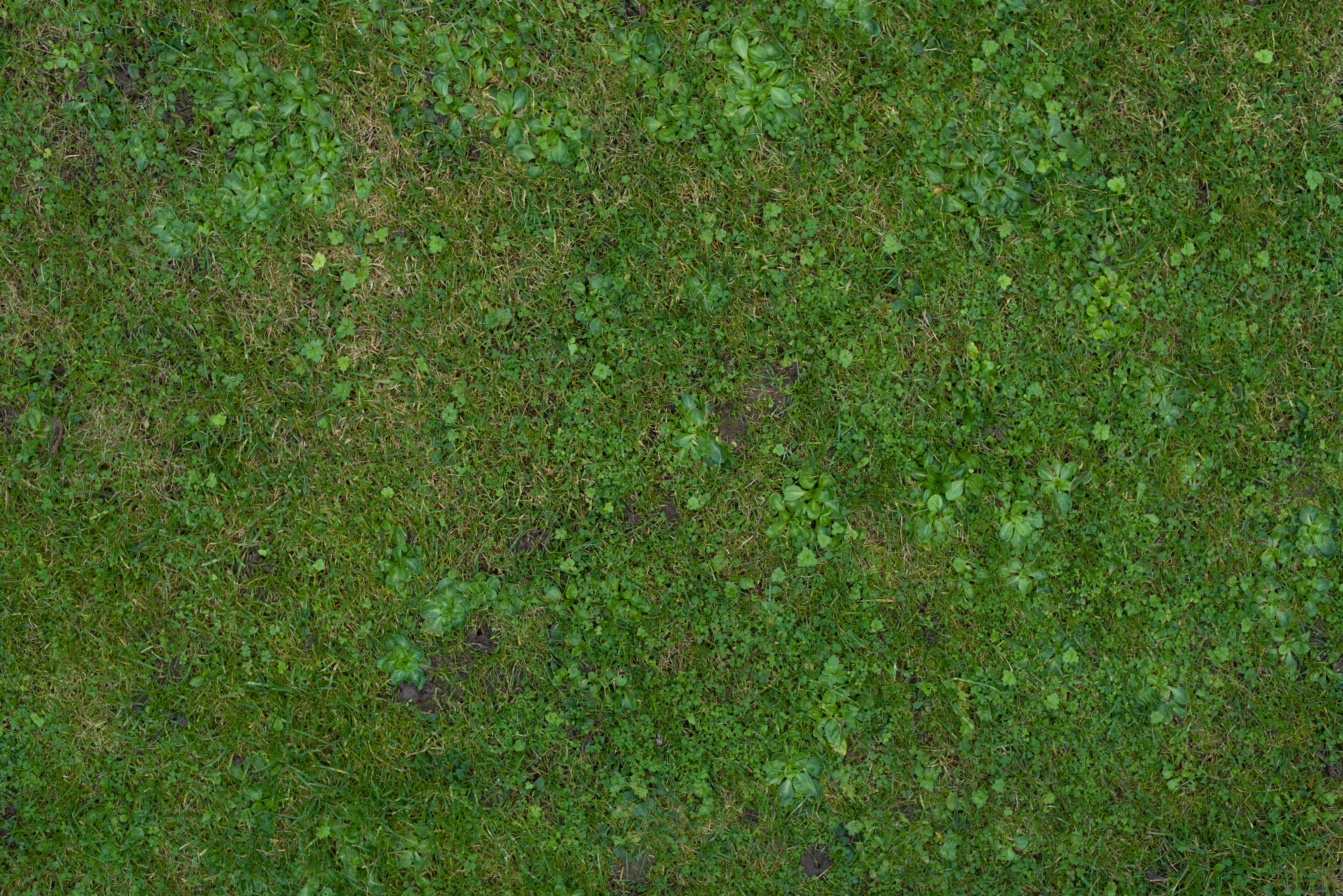 Grass - Texture Ninja