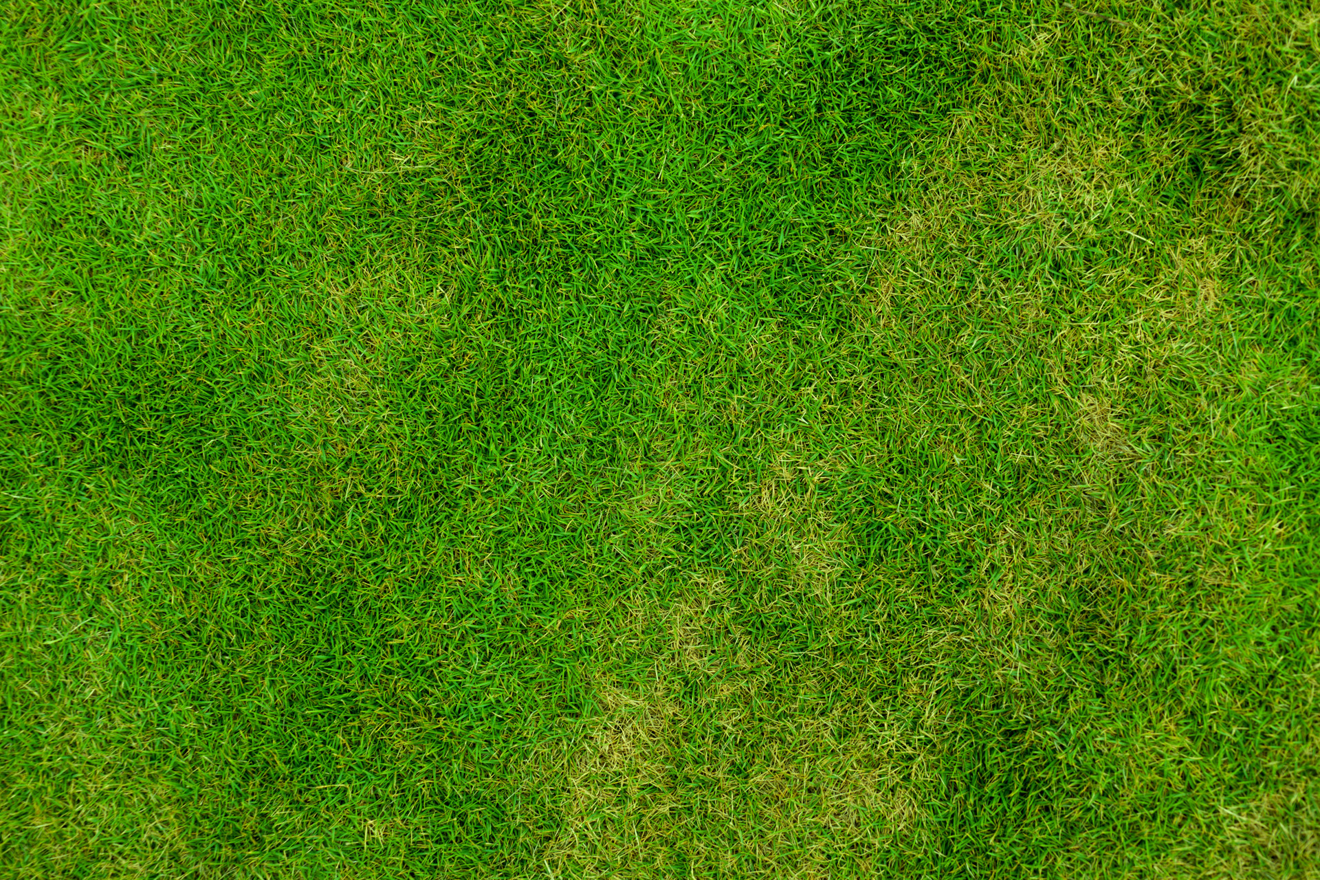 Grass, grass, texture, texture and backgrounds grass, green grass