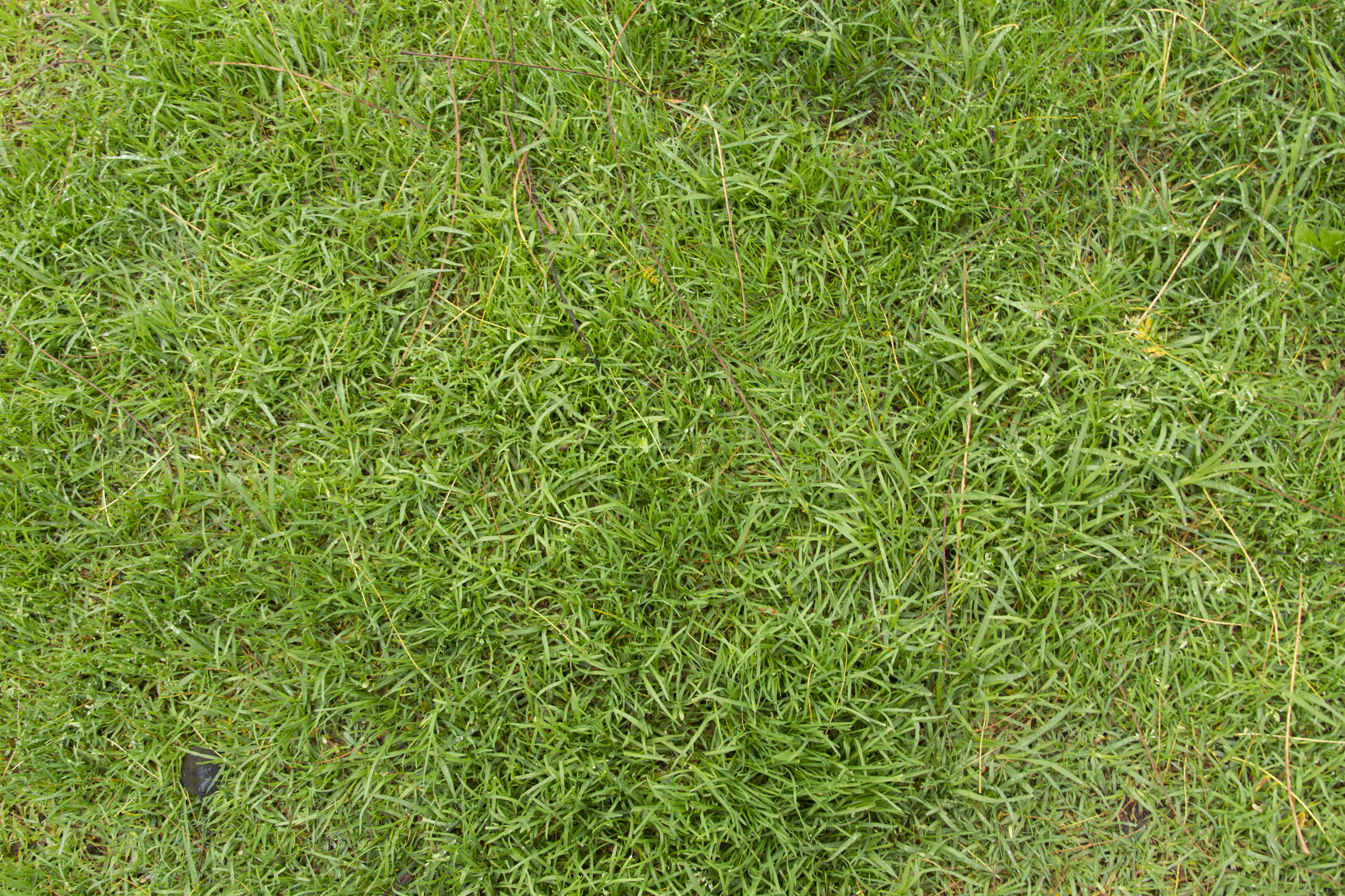 Green Lawn Grass Texture - 14Textures