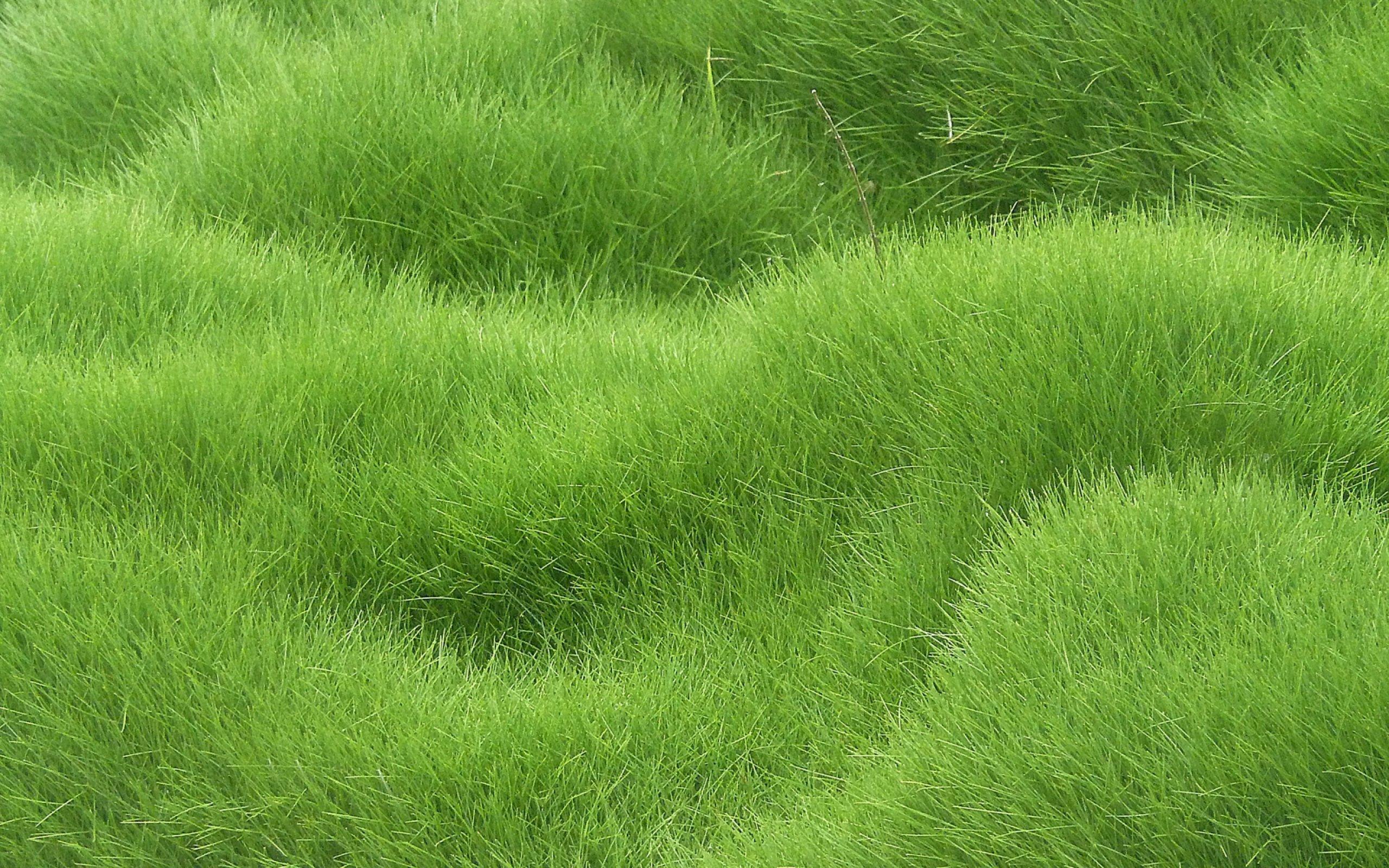 Grass Texture HD - WallDevil