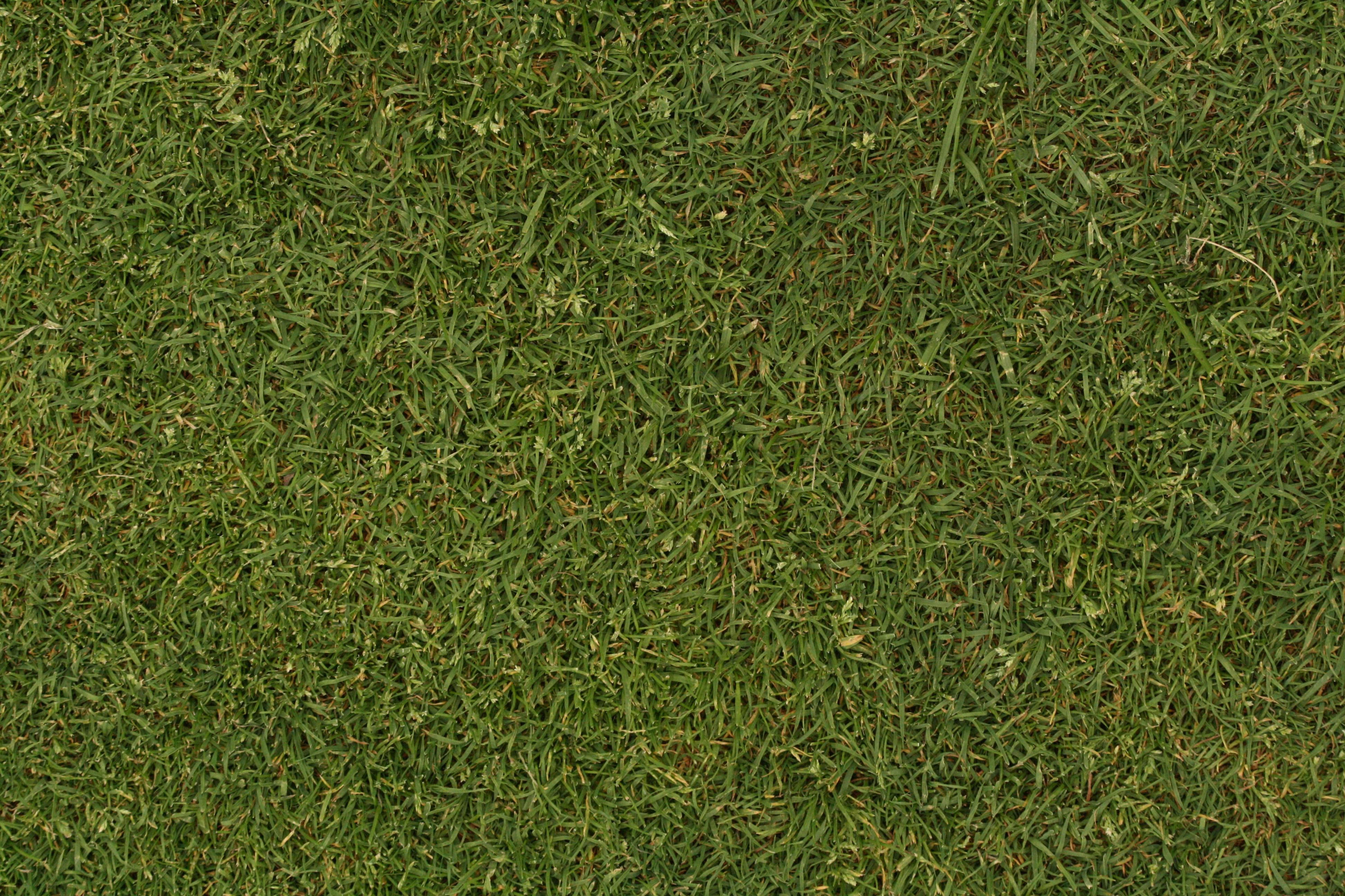 Grass Textures | Texturemate.com