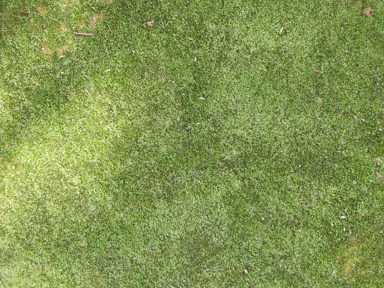 Grass texture, Grass, Green, Lawn, Organic, HQ Photo