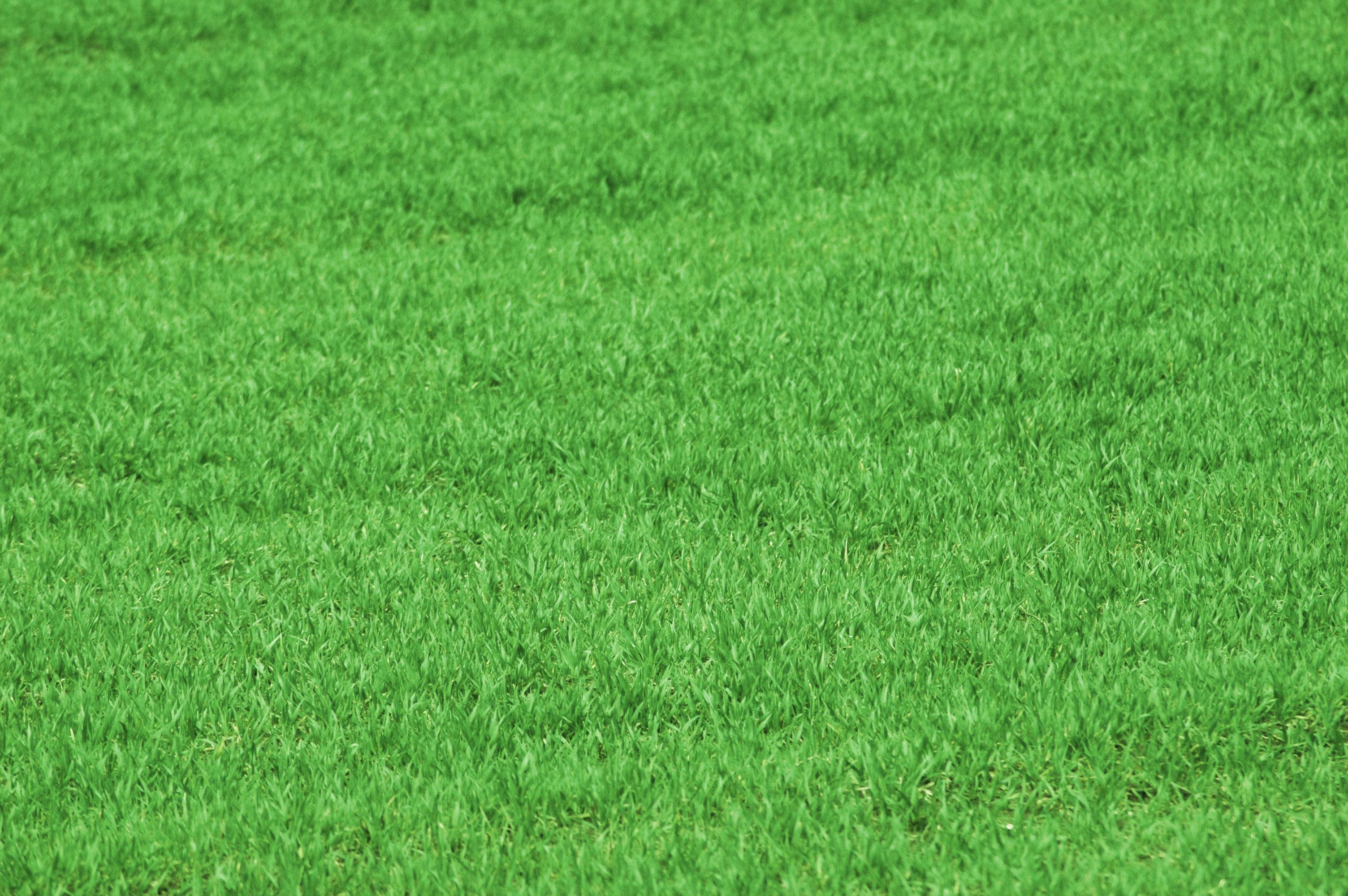 Grass Texture, Grass, Green, Nature, Spring, HQ Photo