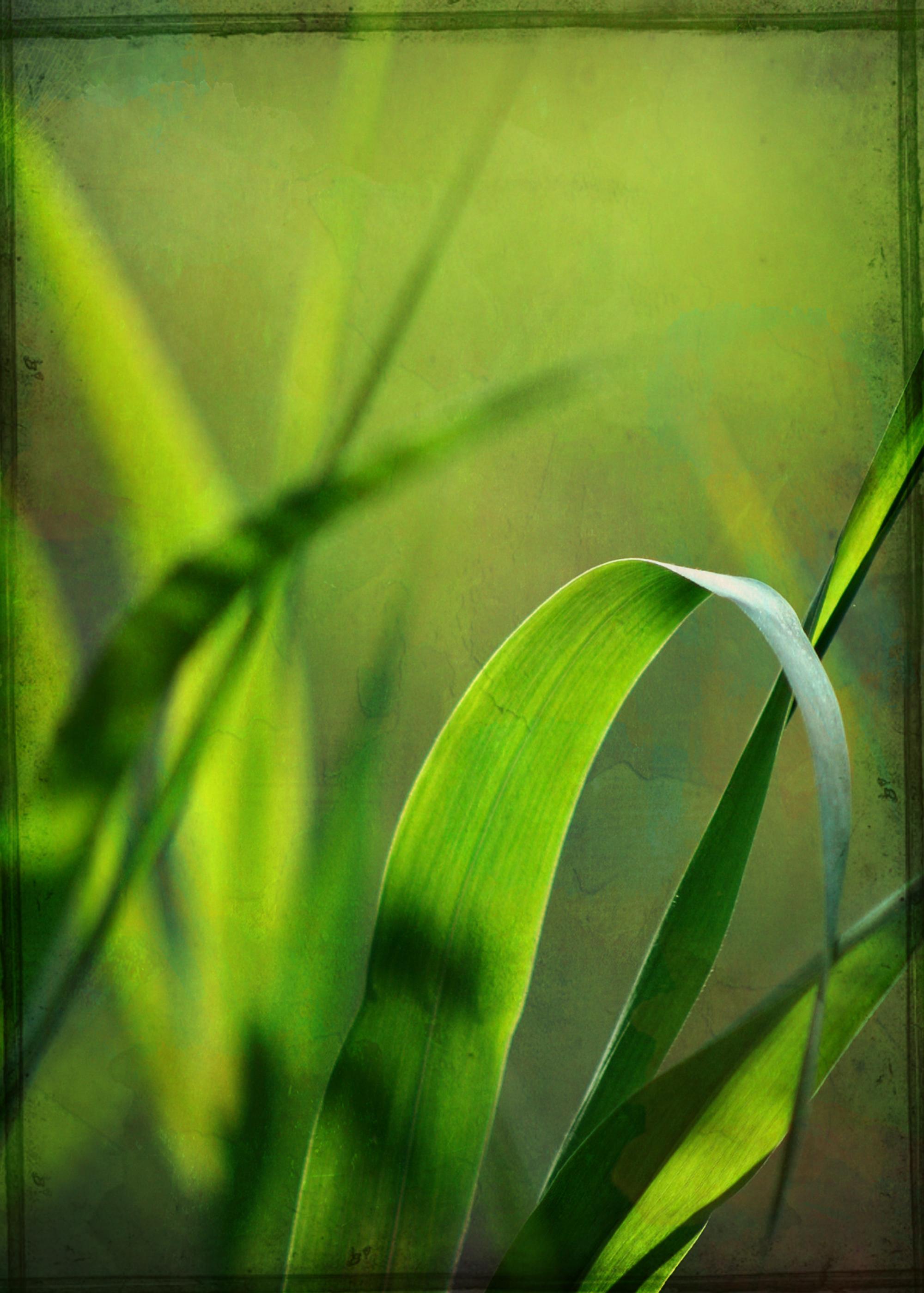 Grass Texture, Grass, Green, Gritty, Grungy, HQ Photo