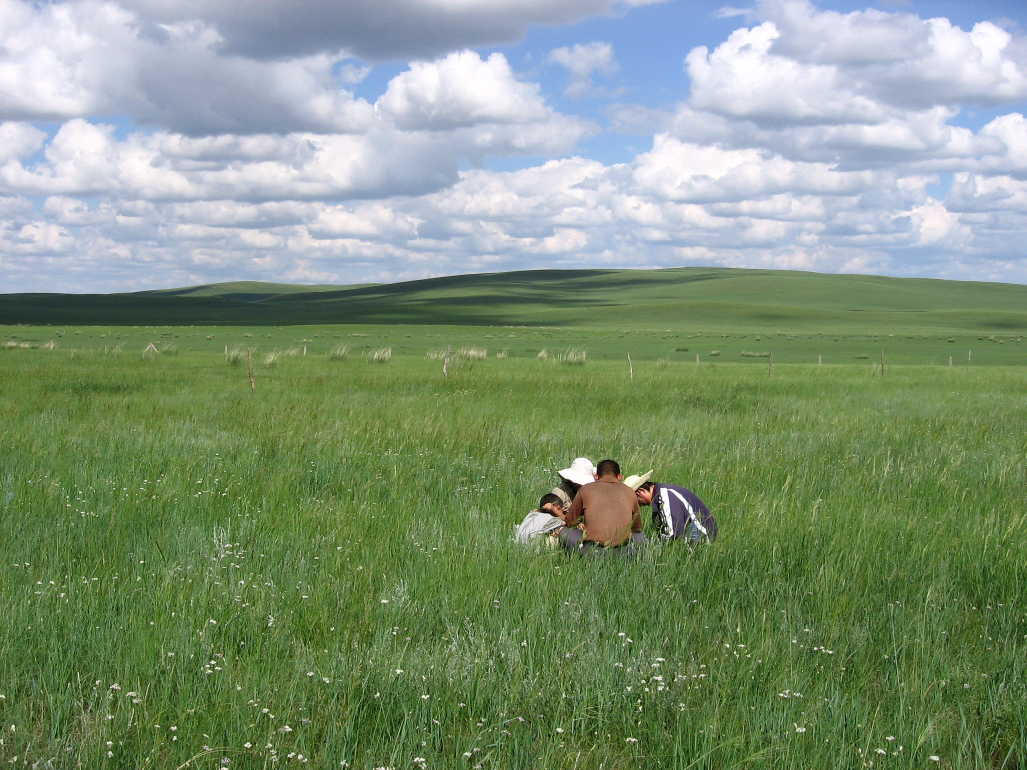 Article: Are all grasslands created equal? Predicting grassland ...