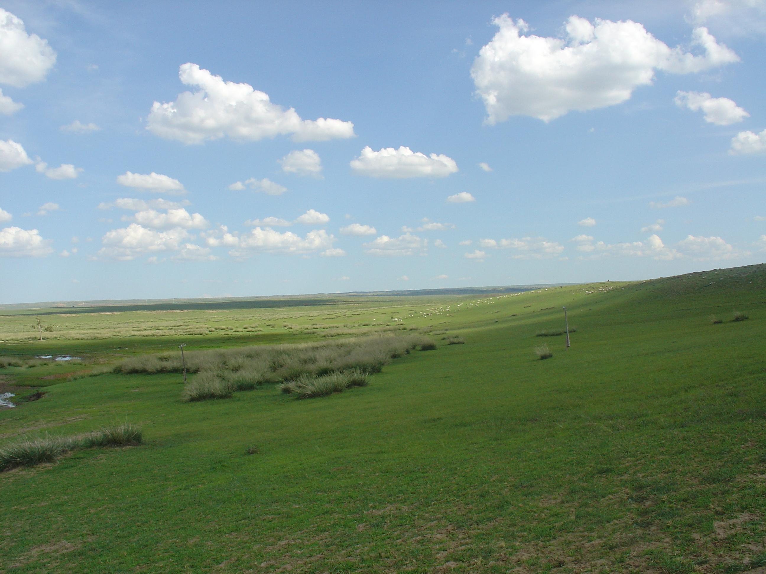 Mongolian-Manchurian grassland - Wikiwand