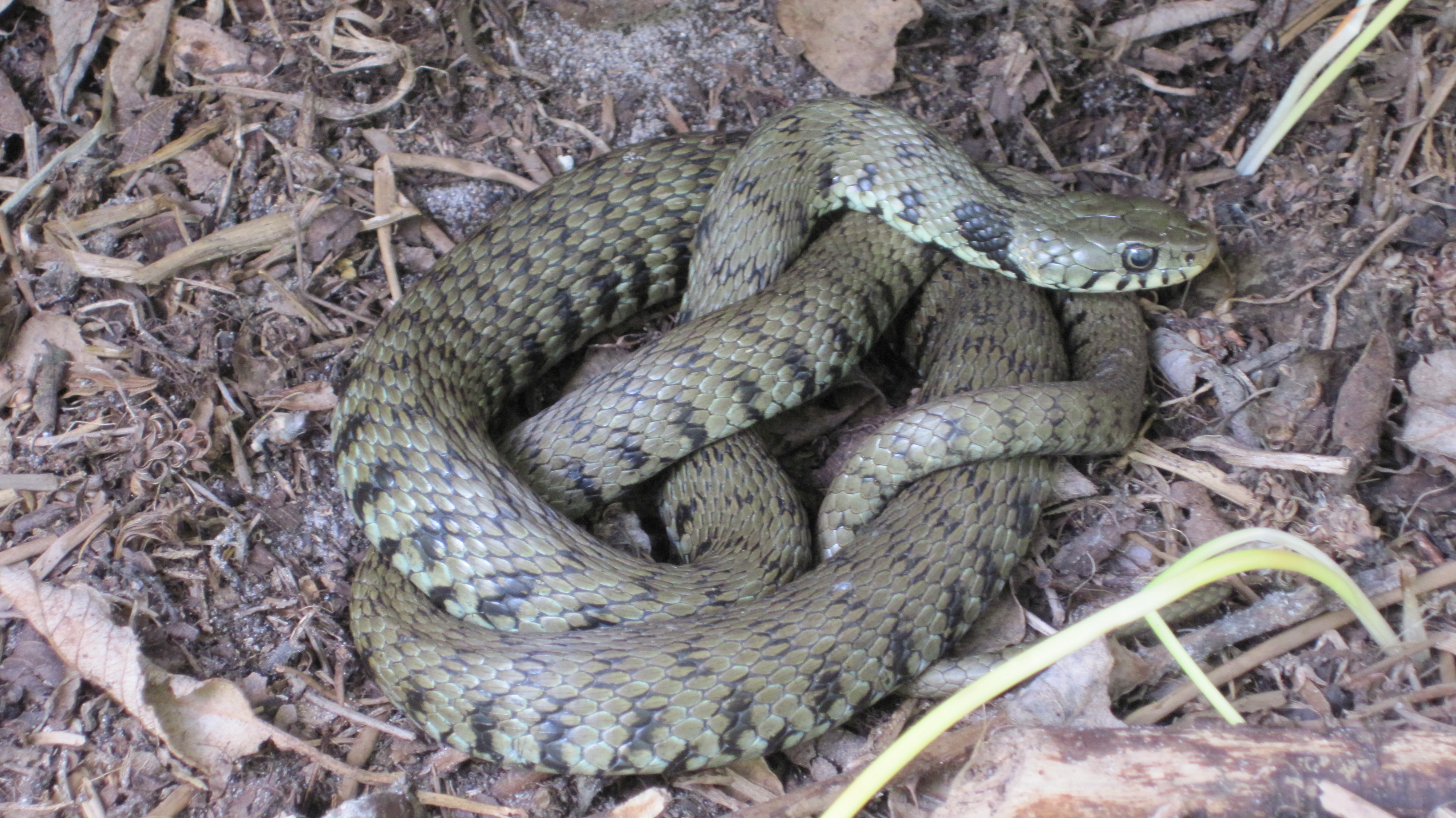 October volunteer activity - Grass snake egg hunt - Birds on the ...
