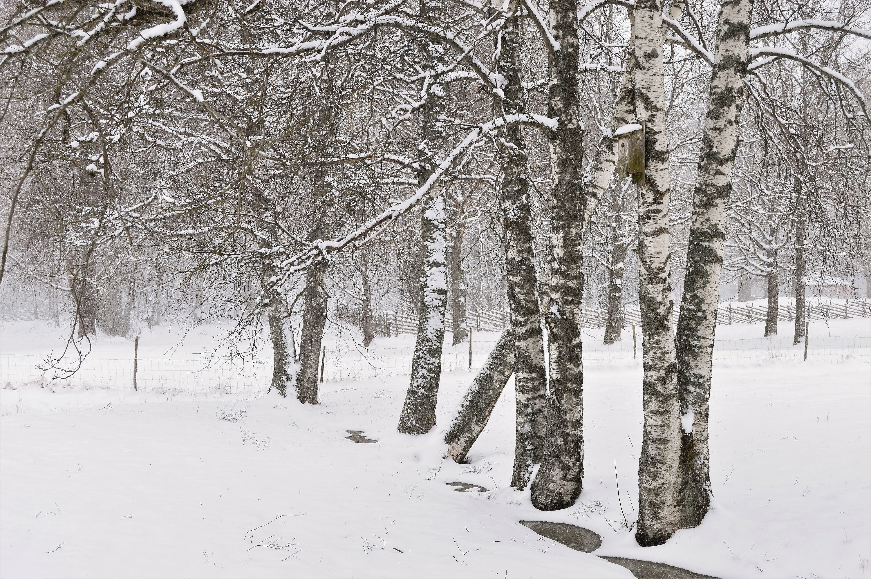 Gray and White Trees, Scenic, Season, Snow, Scene, HQ Photo