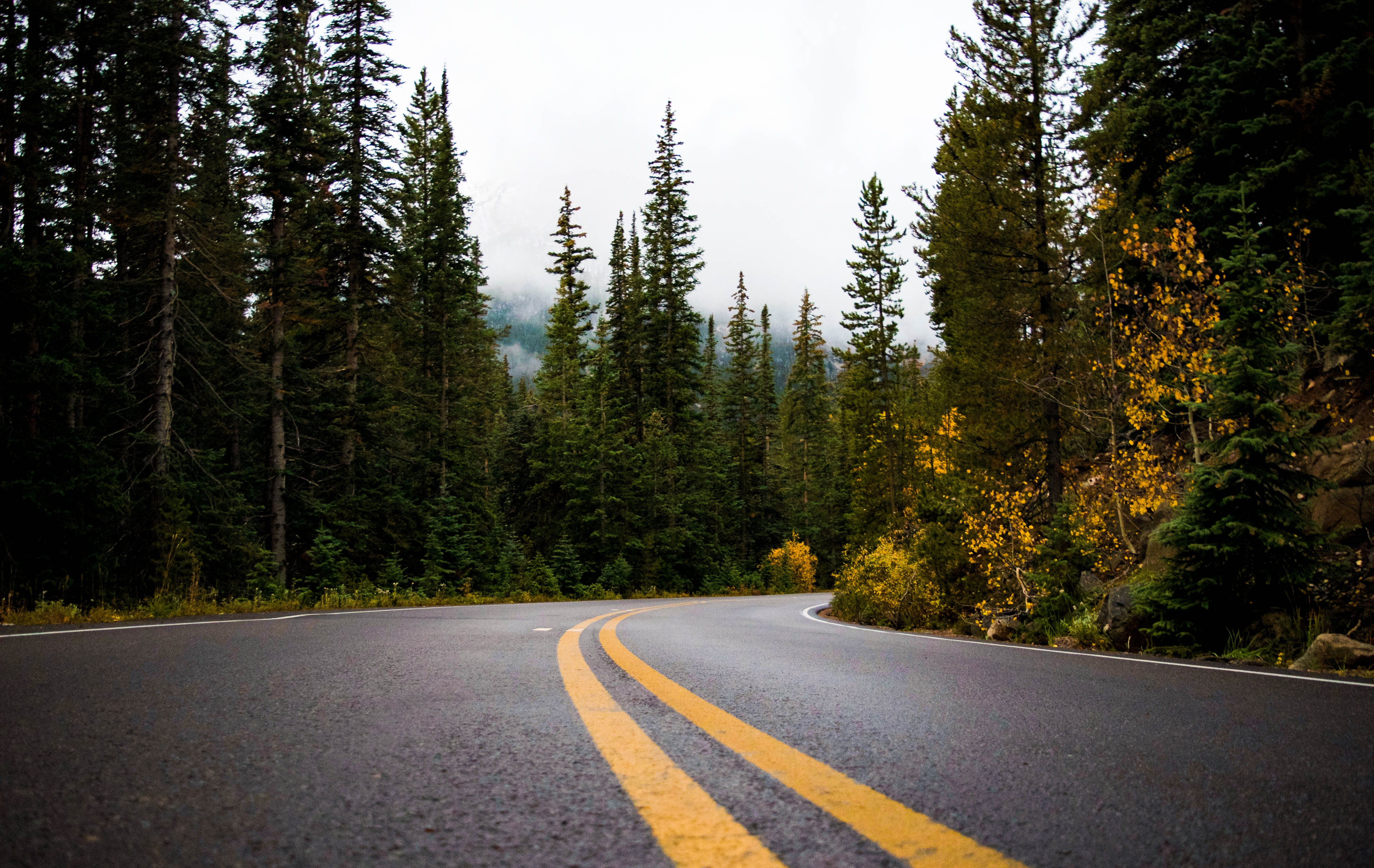Free Photo Gray And Yellow Road Between Forest Asphalt Forest Perspective Free Download Jooinn