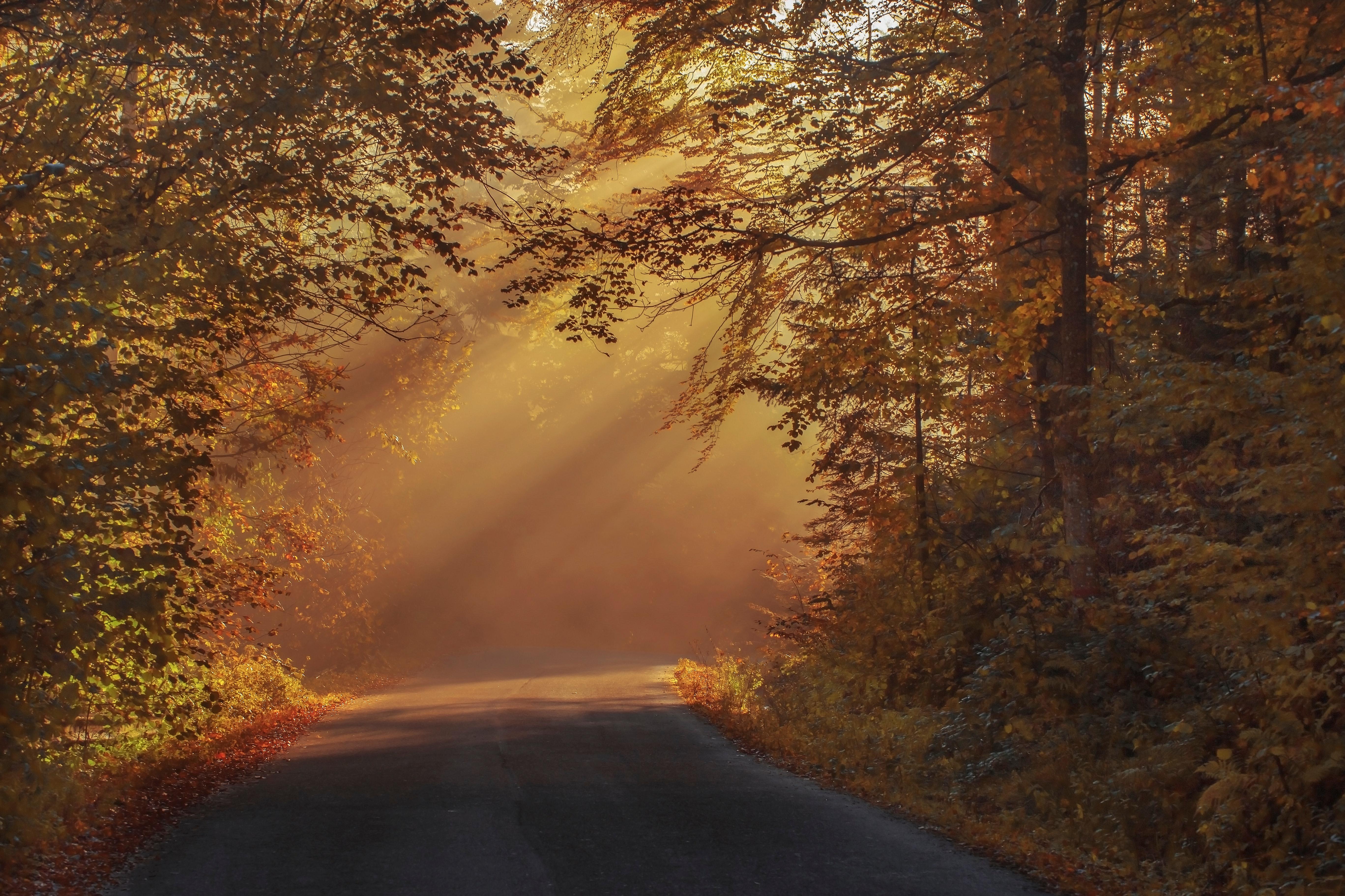 Gray Asphalt Road in Between Brown Orange Leaf Trees during Daytime, Autumnal, Rays, Wood, Water, HQ Photo