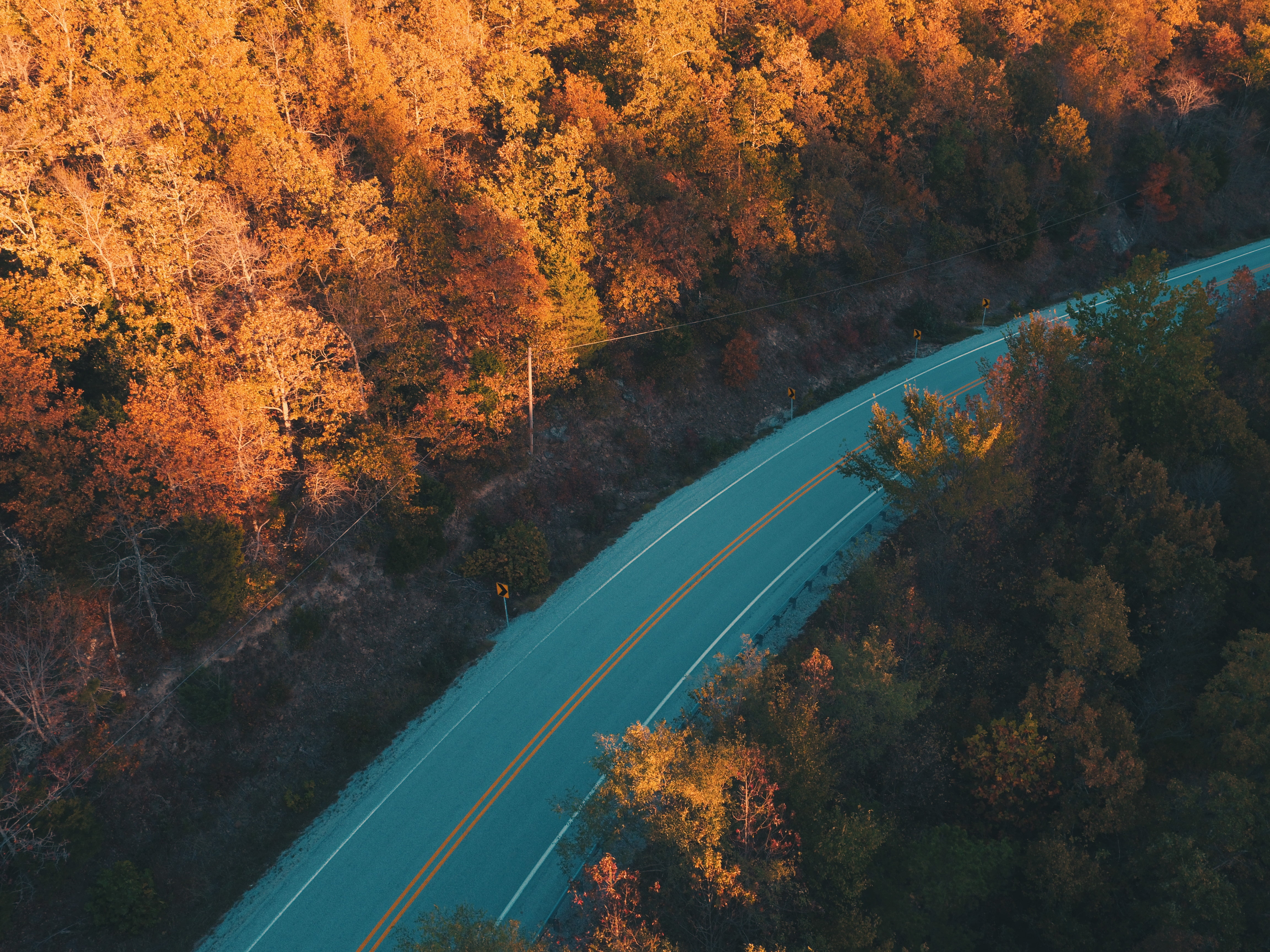Aerial photography of gray concrete road between orange leaf trees ...