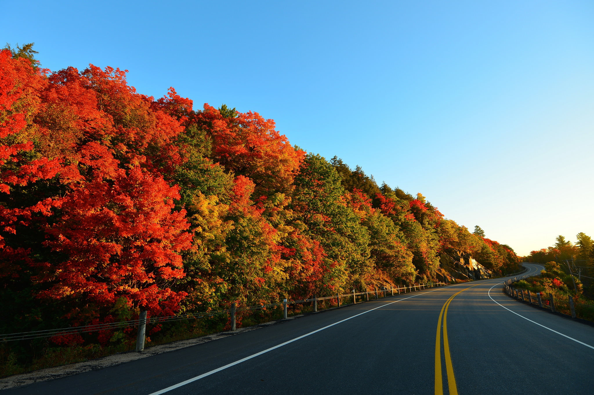 Green and red trees near gray concrete road HD wallpaper | Wallpaper ...