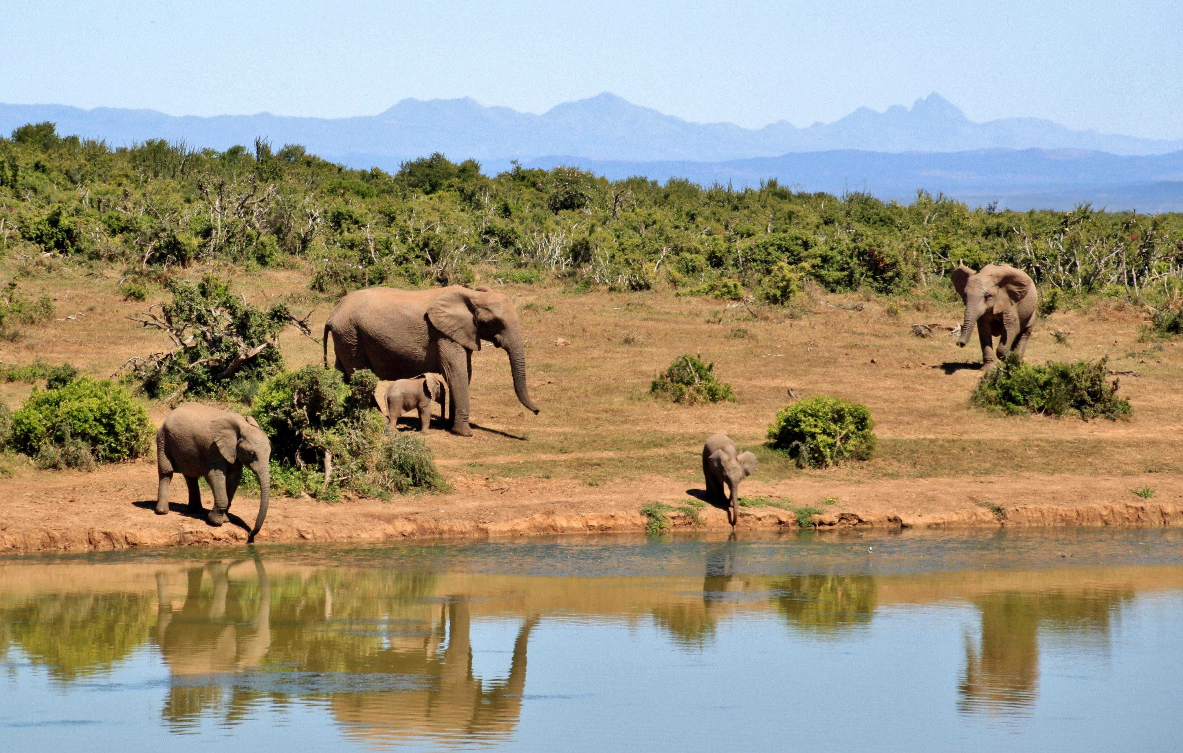 Gray Elephants Near Body of Water during Daytime, Africa, Animals, Elephants, Forest, HQ Photo