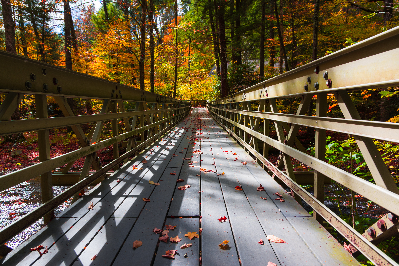 Photo of gray wooden bridge HD wallpaper | Wallpaper Flare