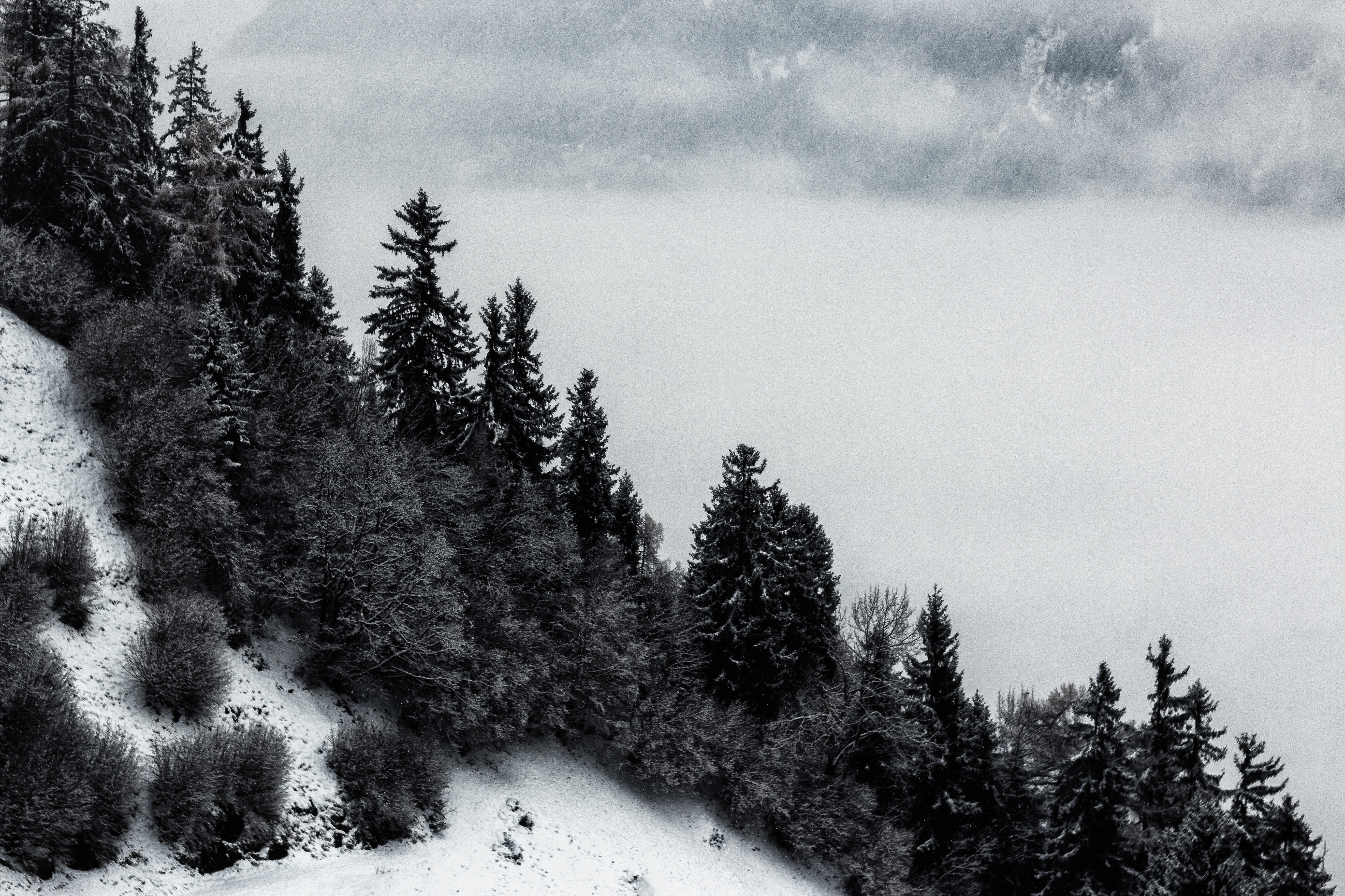 Grayscale Photo Of Pine Trees And Mountain, Black and white, Nature, Winter, Weather, HQ Photo