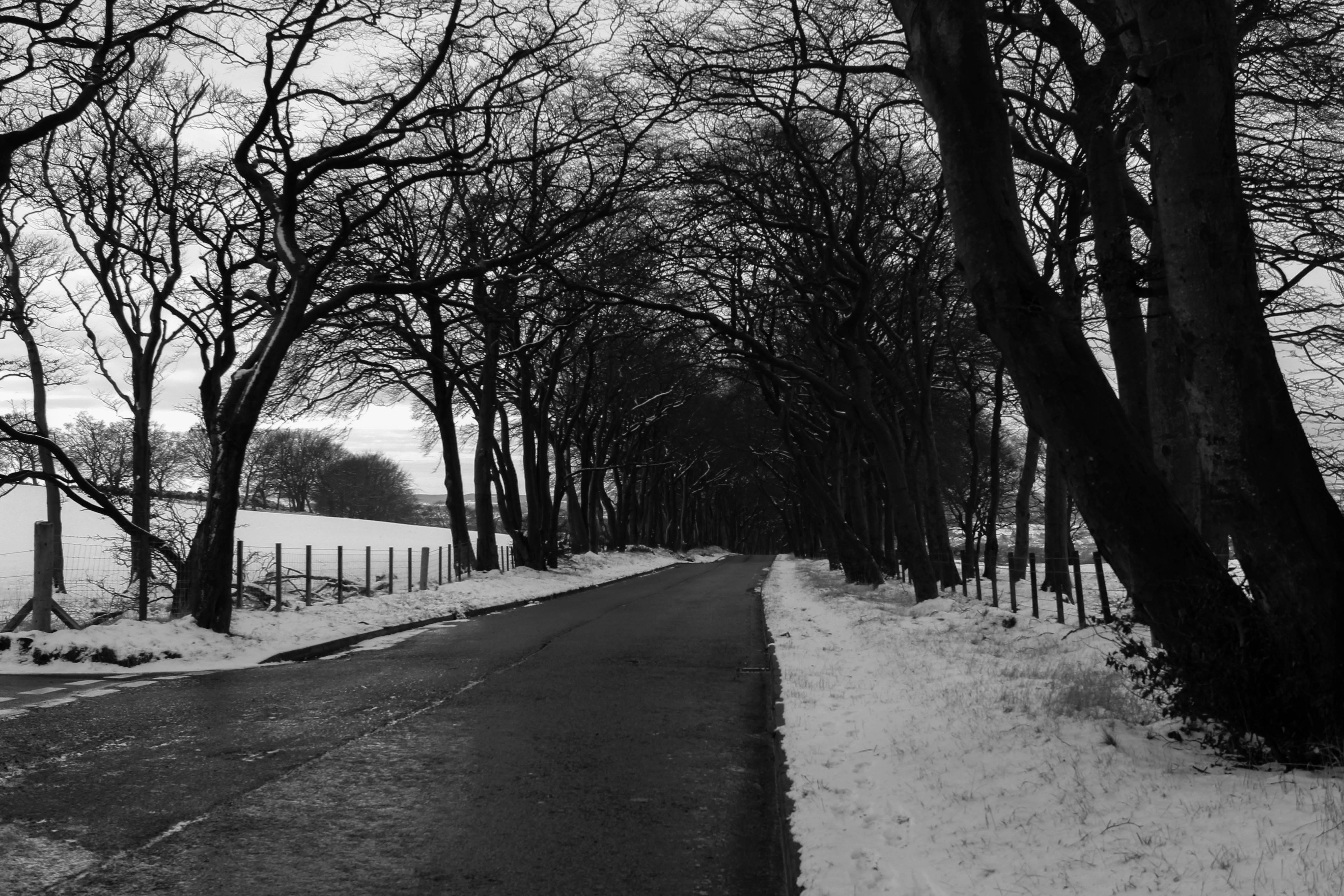 Grayscale Photo of Road in Between Withered Trees, Black and white, Road, Winter landscape, Winter, HQ Photo
