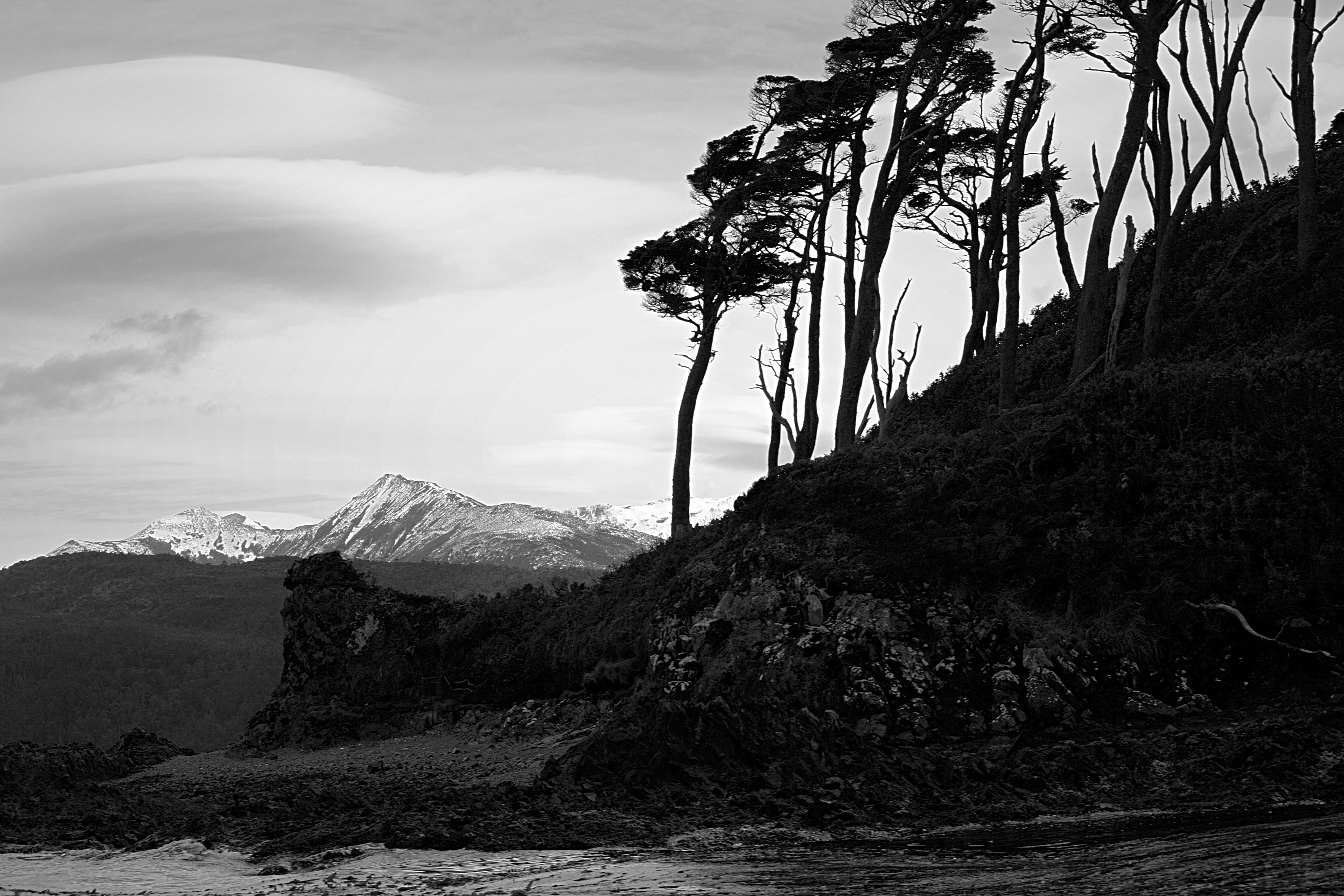 Grayscale photo of trees near body of water