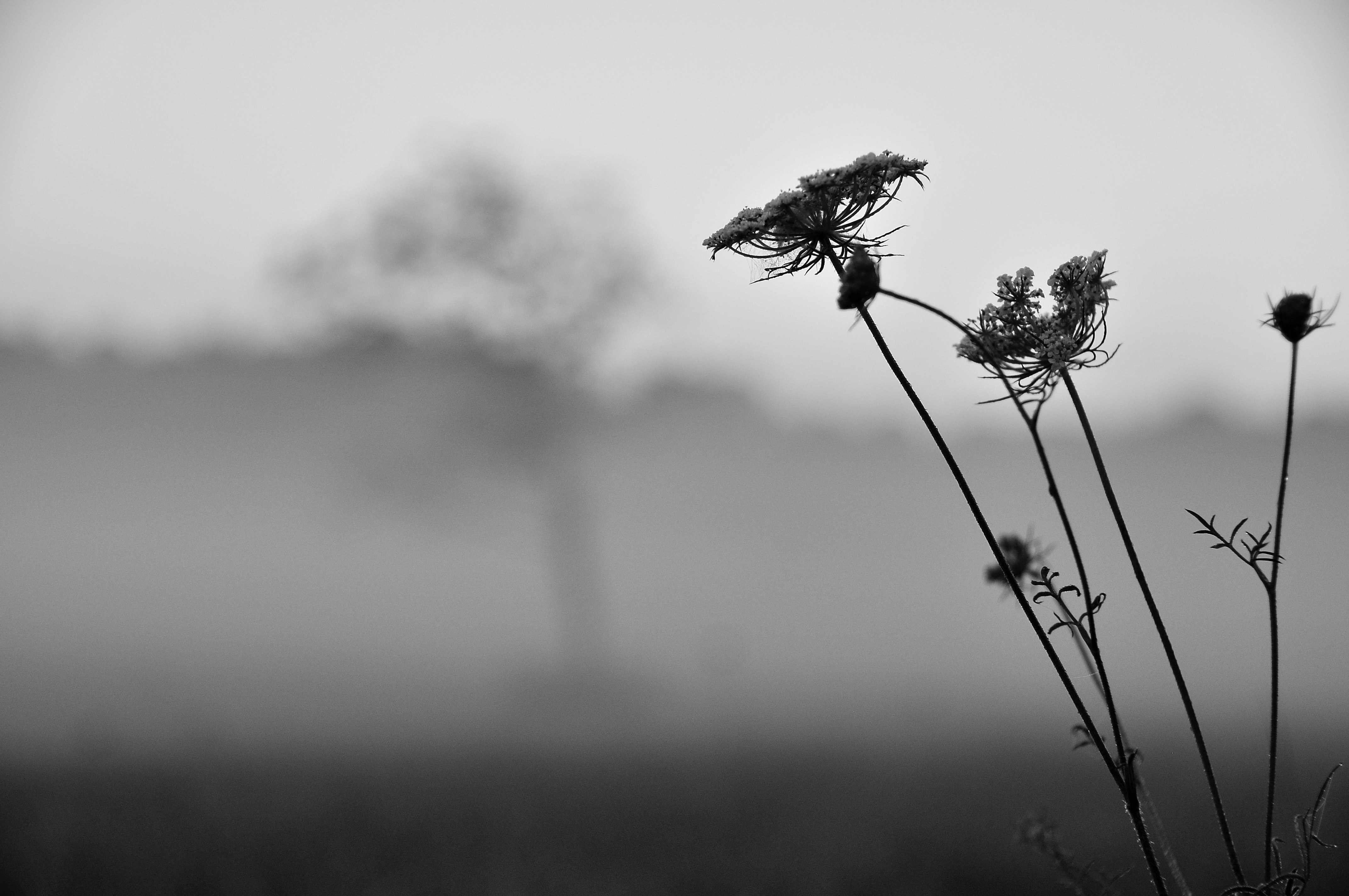 Grayscale photo of withered flower
