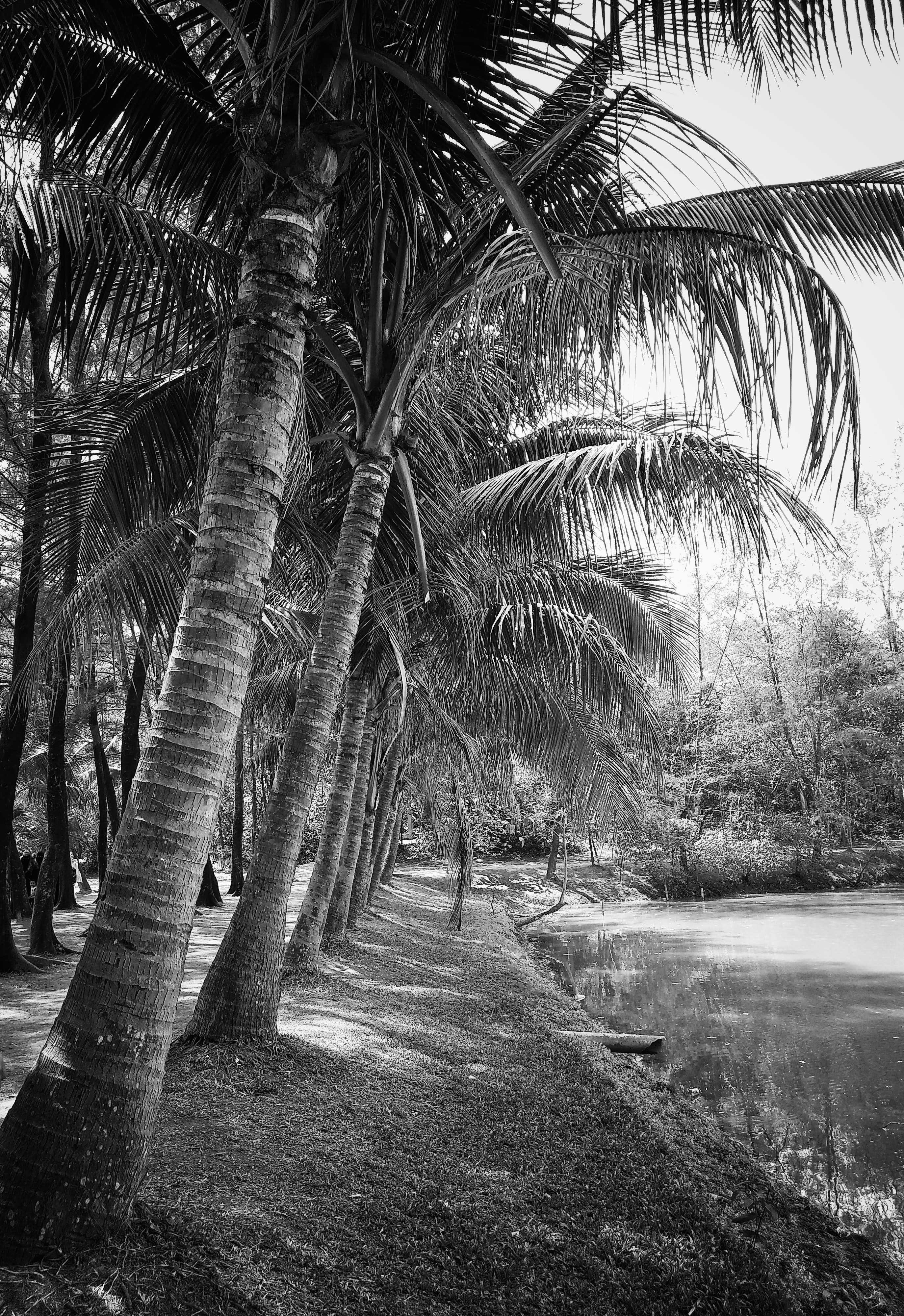 Grayscale photography of coconut trees beside body of water
