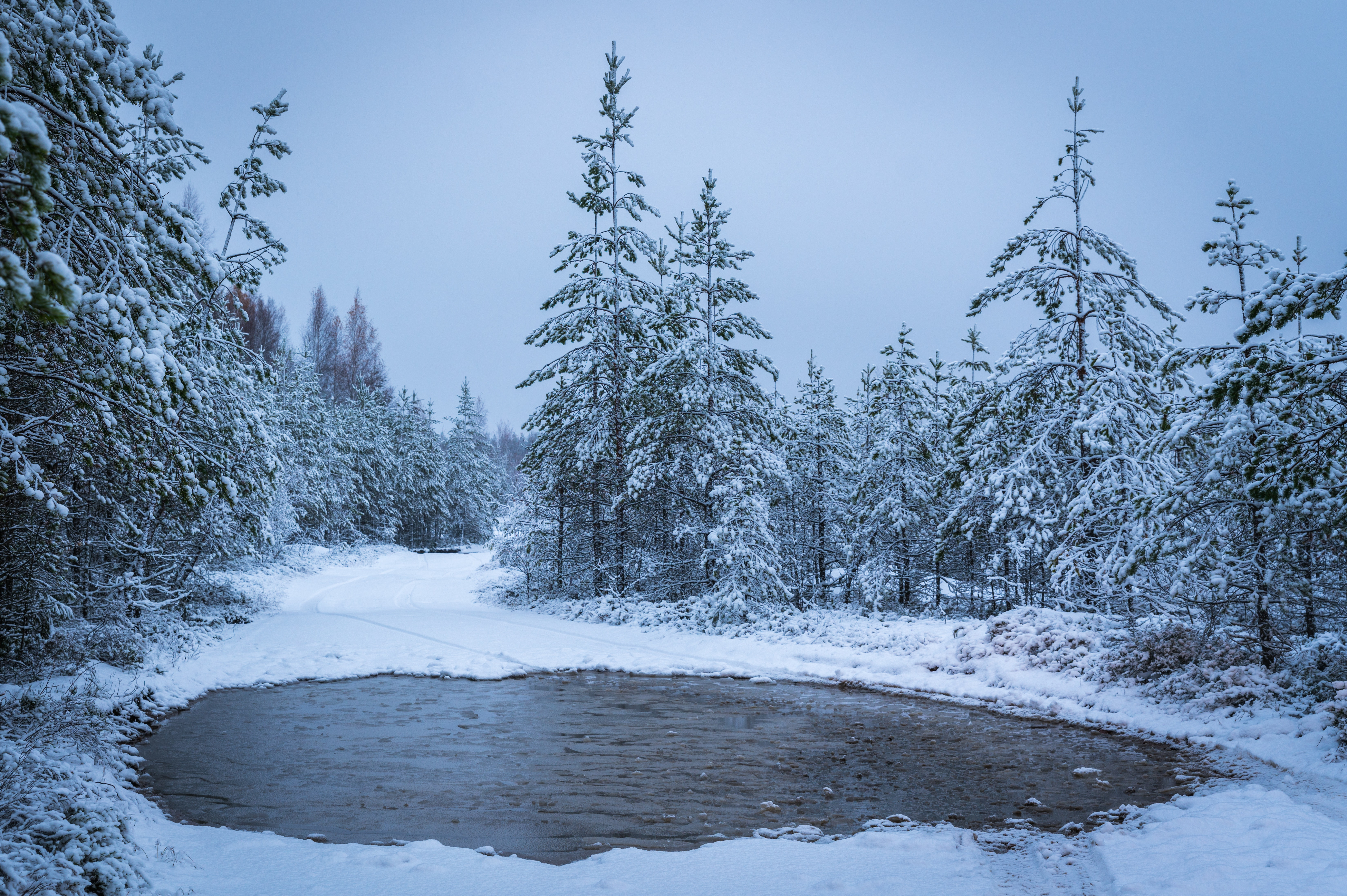 Grayscale Photography of Lake Surrounded With Trees, Stones, Snow, Trees, Scenic, HQ Photo