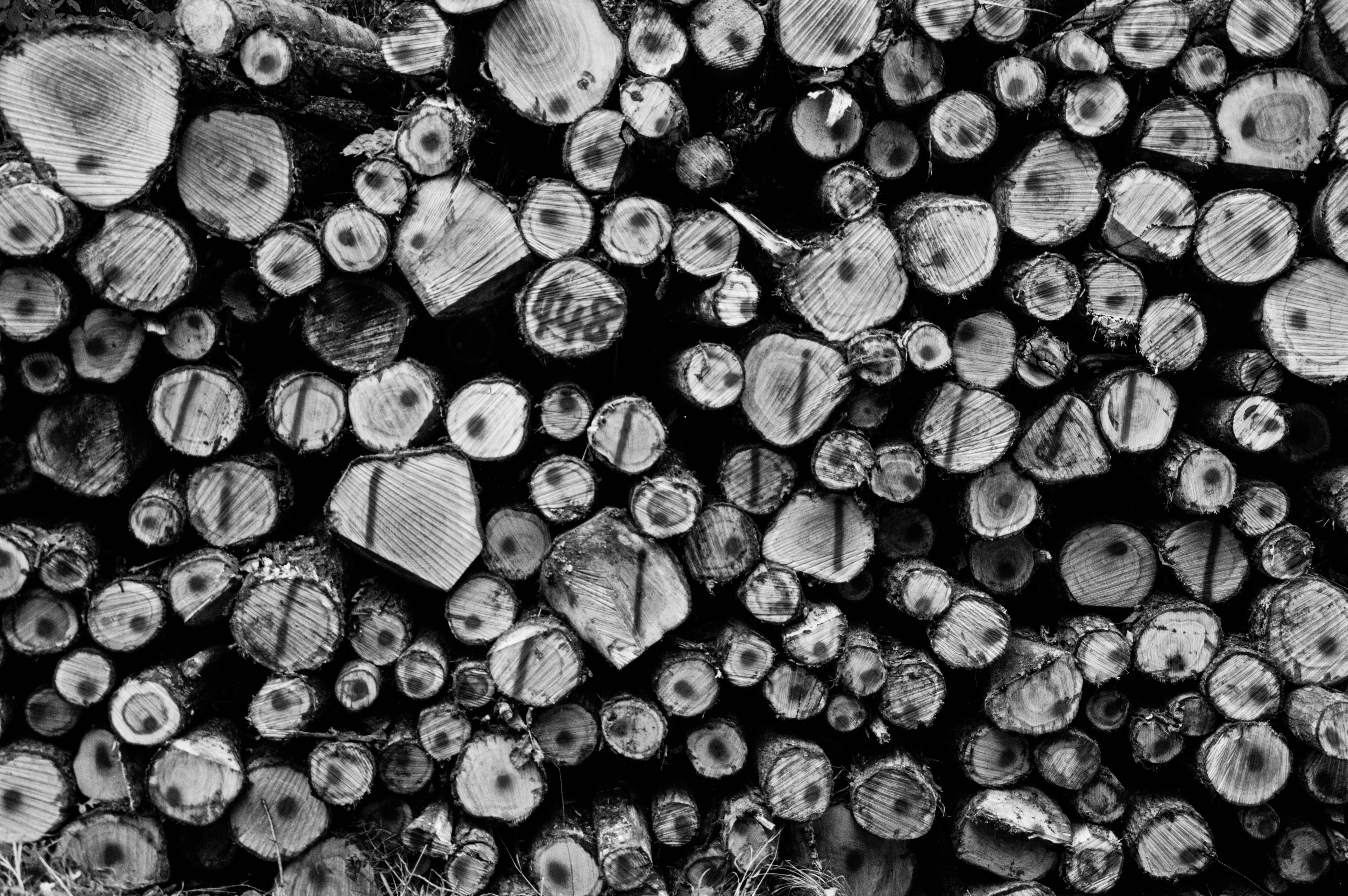 Grayscale photography of wirewood logs
