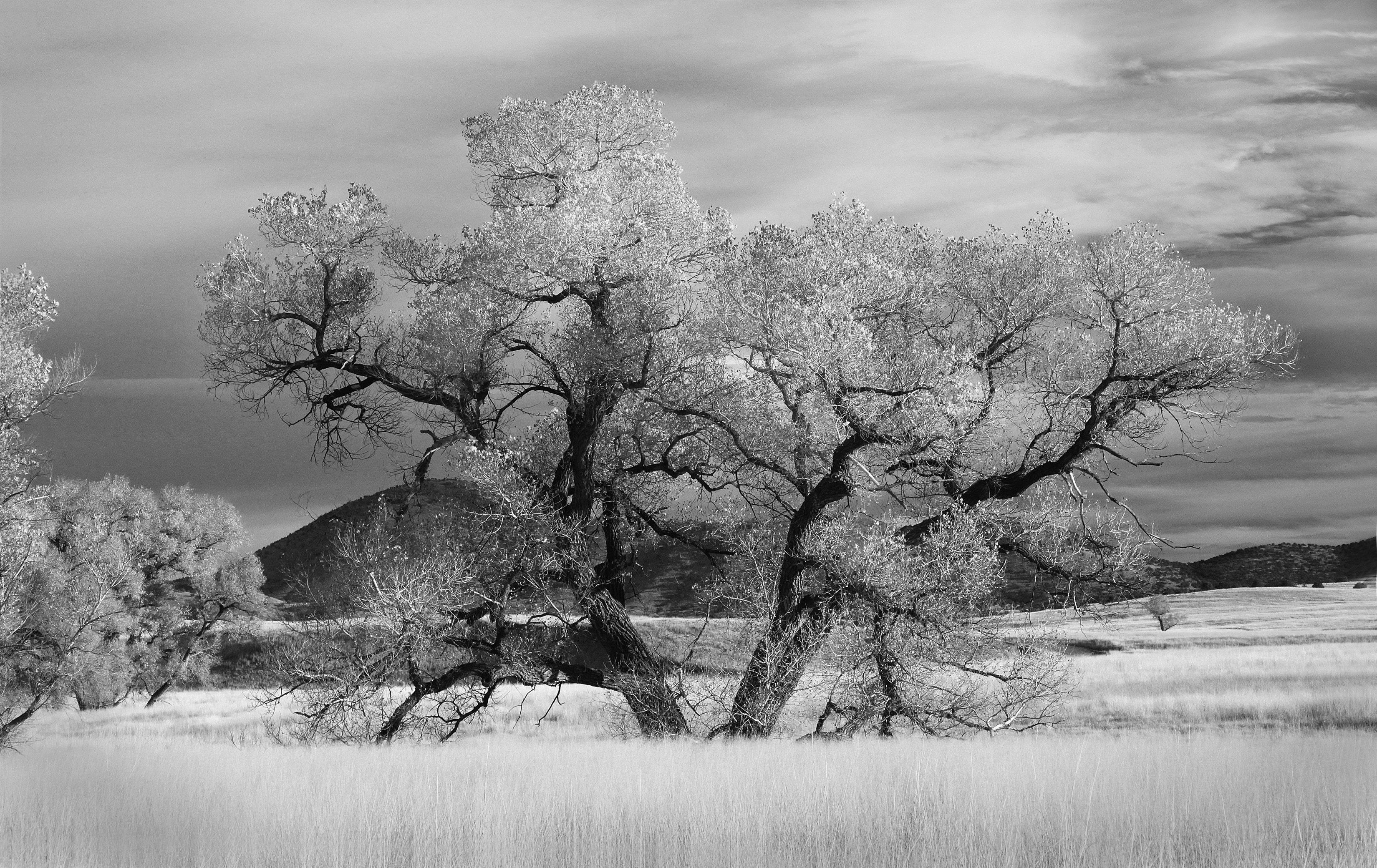 Graysclae of tree near grass photo