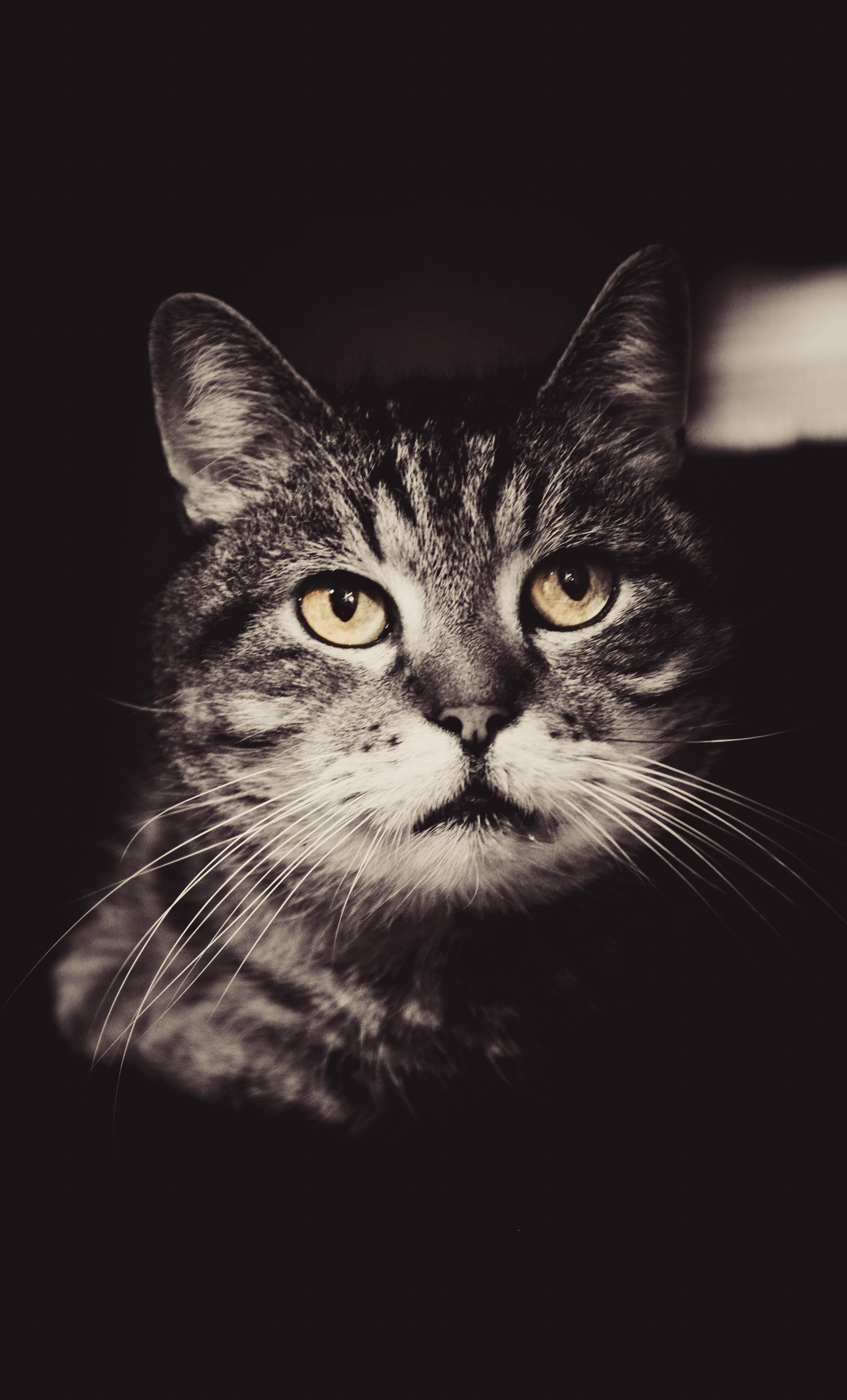 Graysclae photo of cat