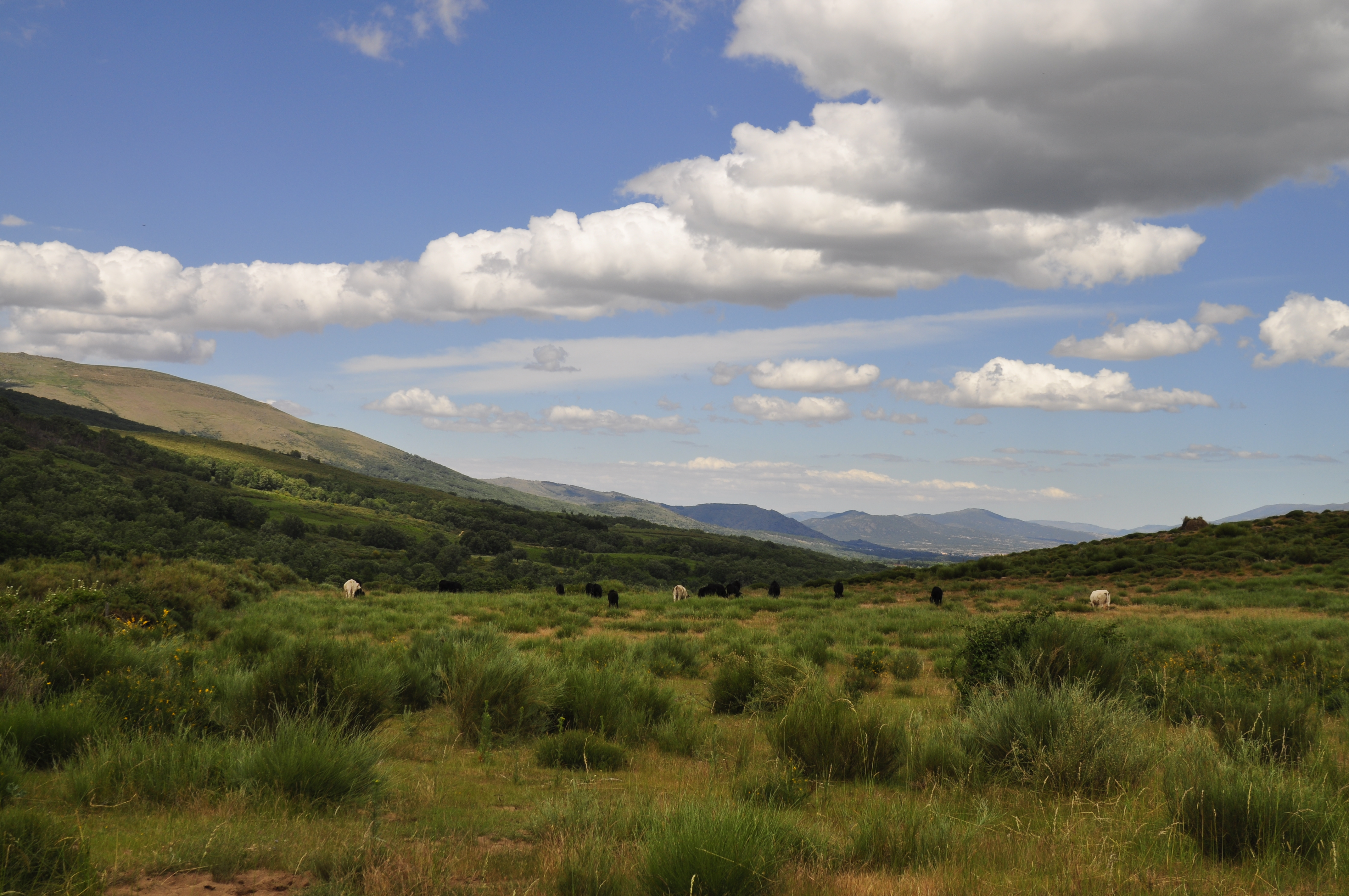 Grazing under the clouds, Campo, Cielo, Clouds, Espana, HQ Photo