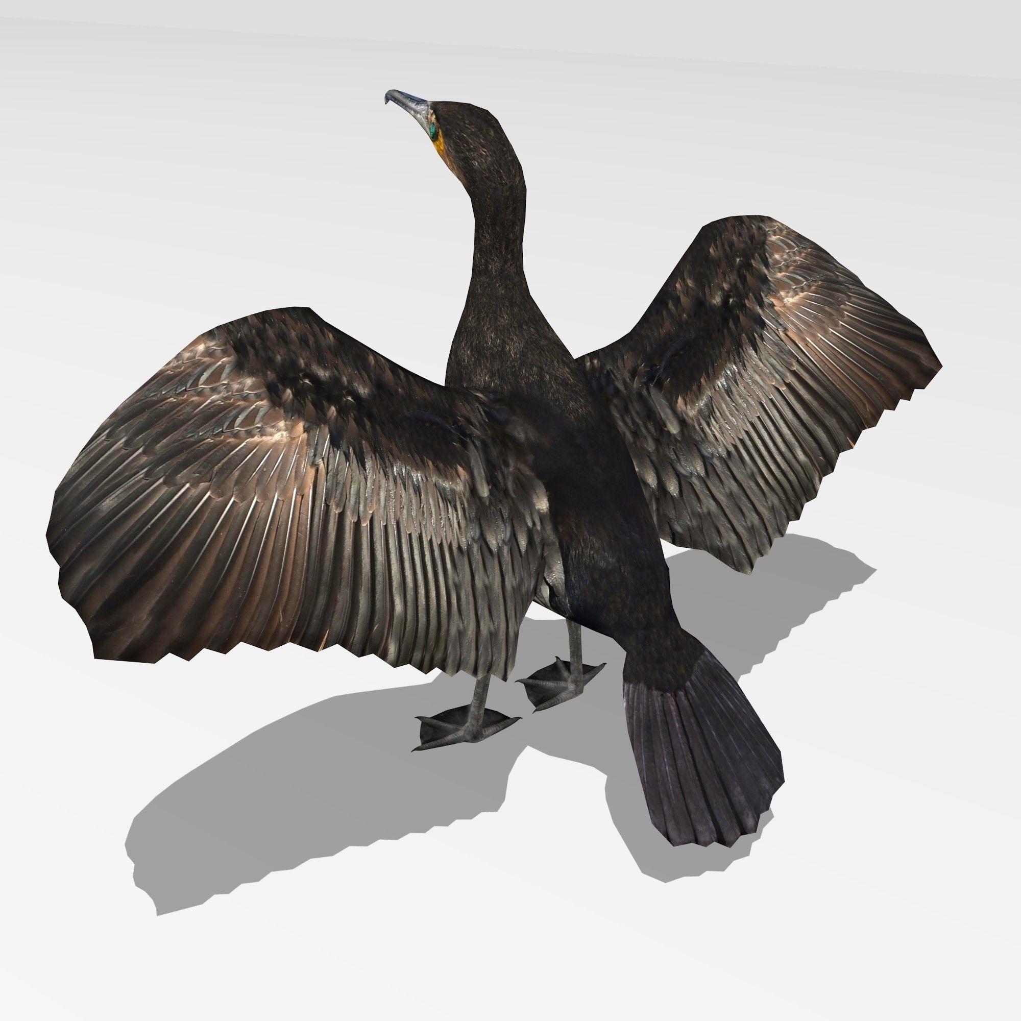 3D asset Great Cormorant   CGTrader