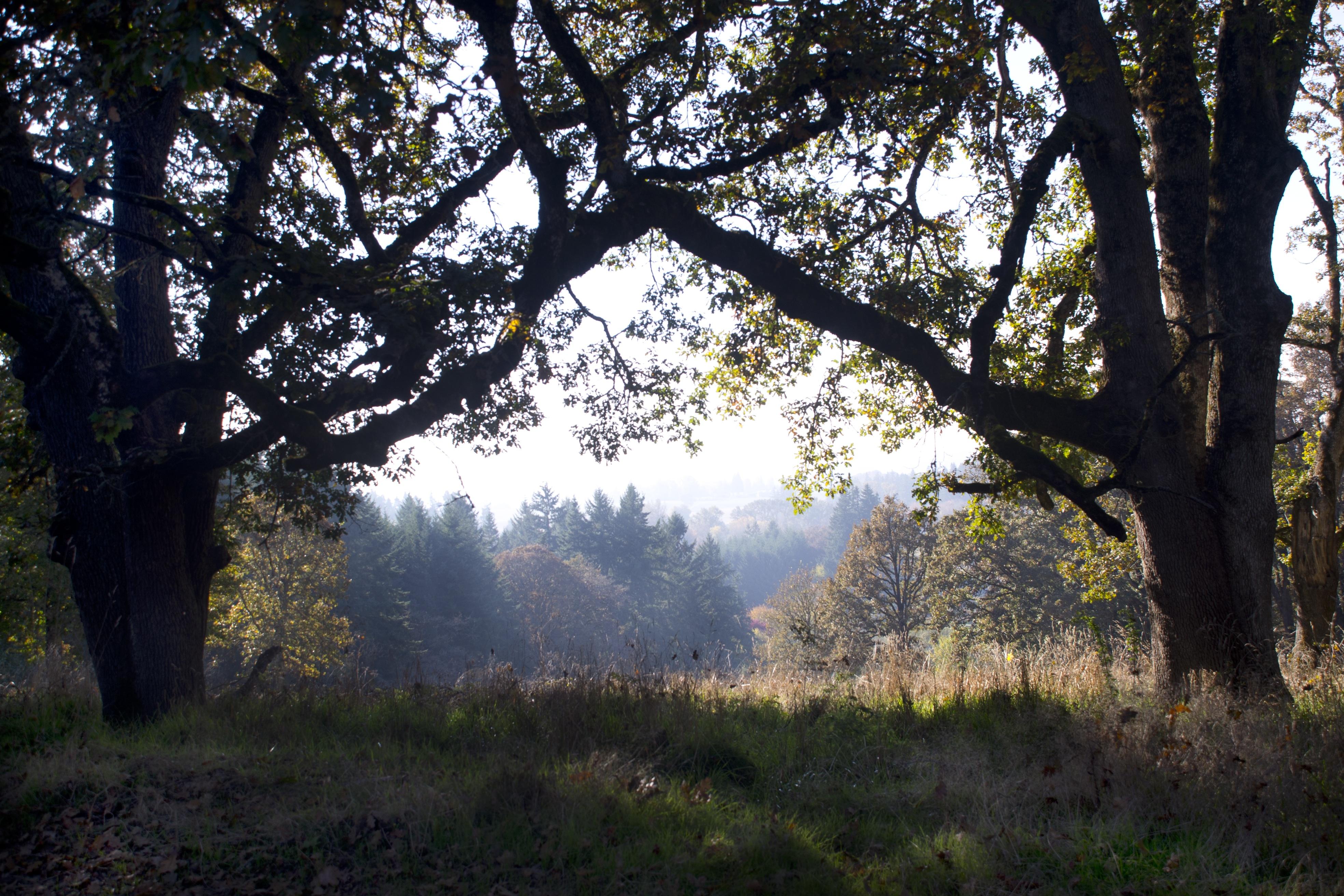 Green, Bunch, Nature, Tree, Wood, HQ Photo
