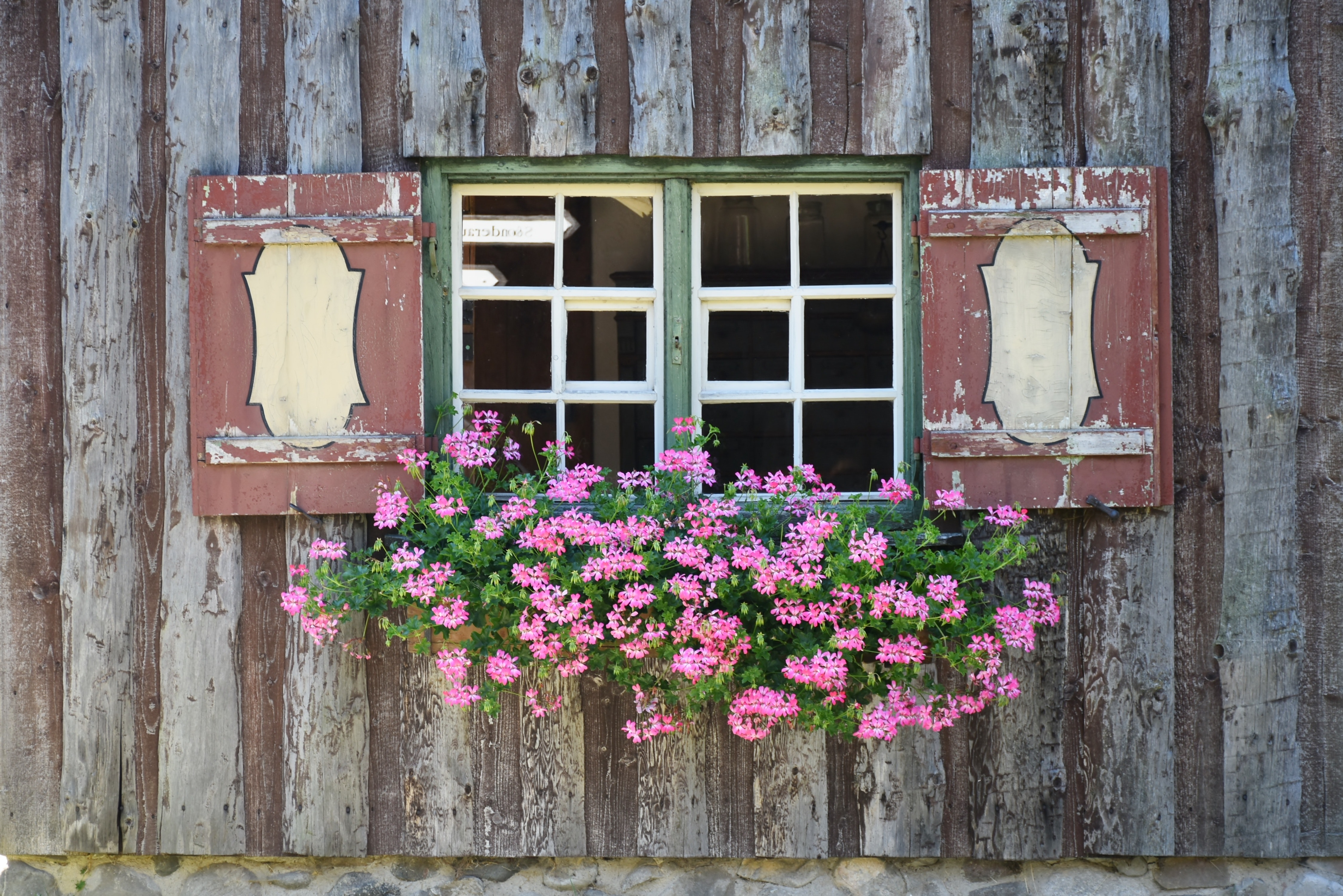 Green and Pink Flower on Green and White Wooden Framed Window, Bloom, Blossom, Flora, Flowers, HQ Photo