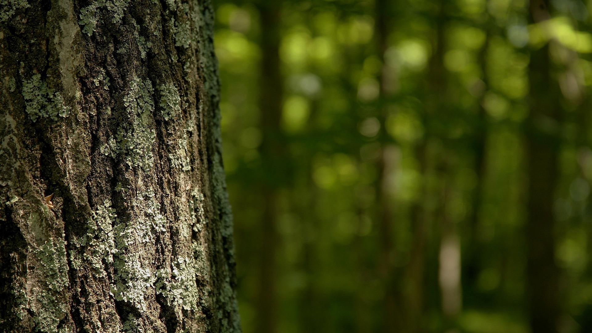 Green bark background photo