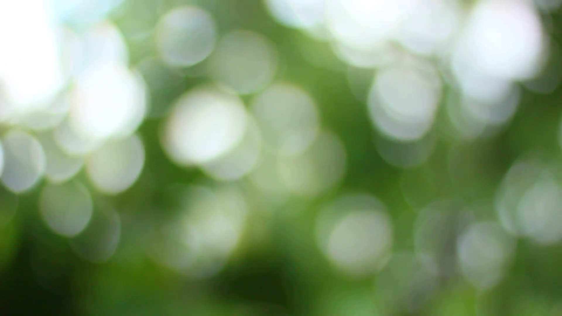 natural green bokeh background Stock Video Footage - Videoblocks