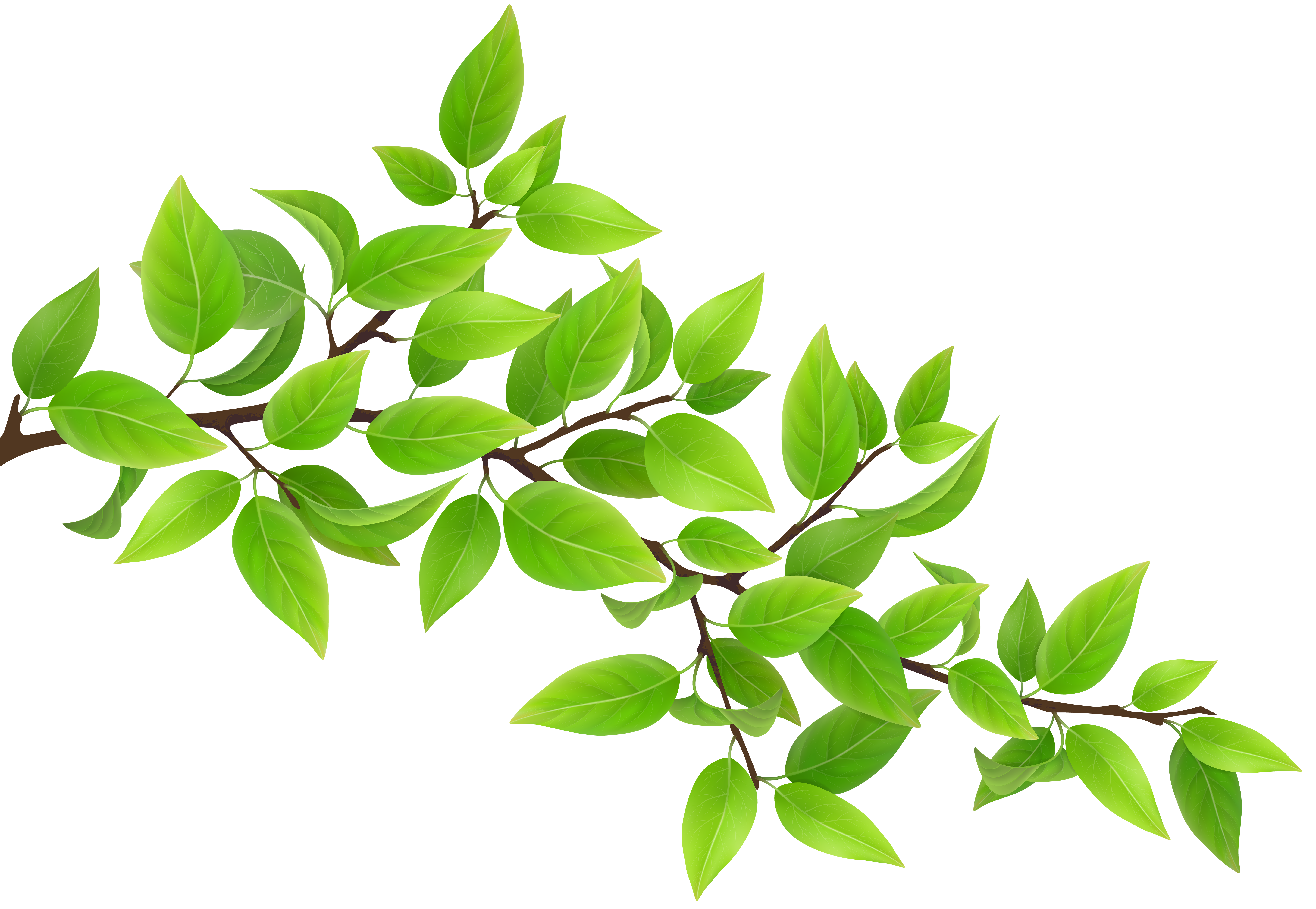 Green Branch Transparent PNG Clip Art Image   Gallery Yopriceville ...