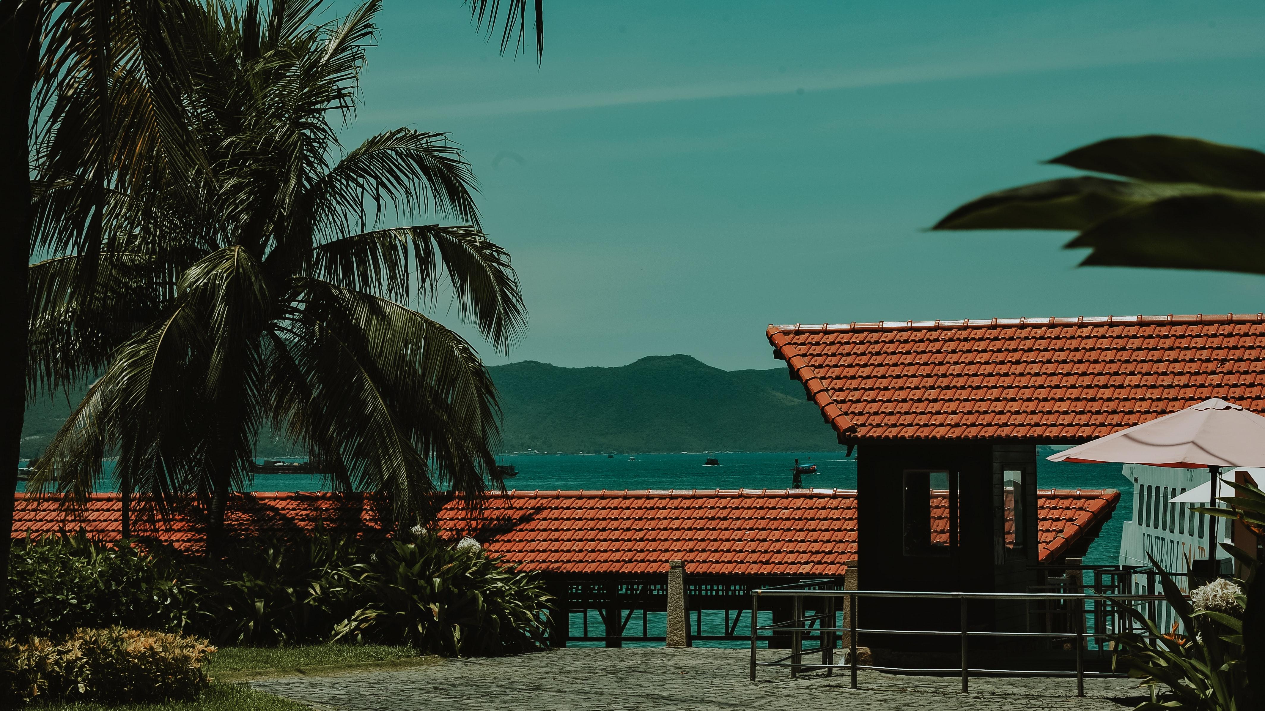 Green coconut tree near shed photo