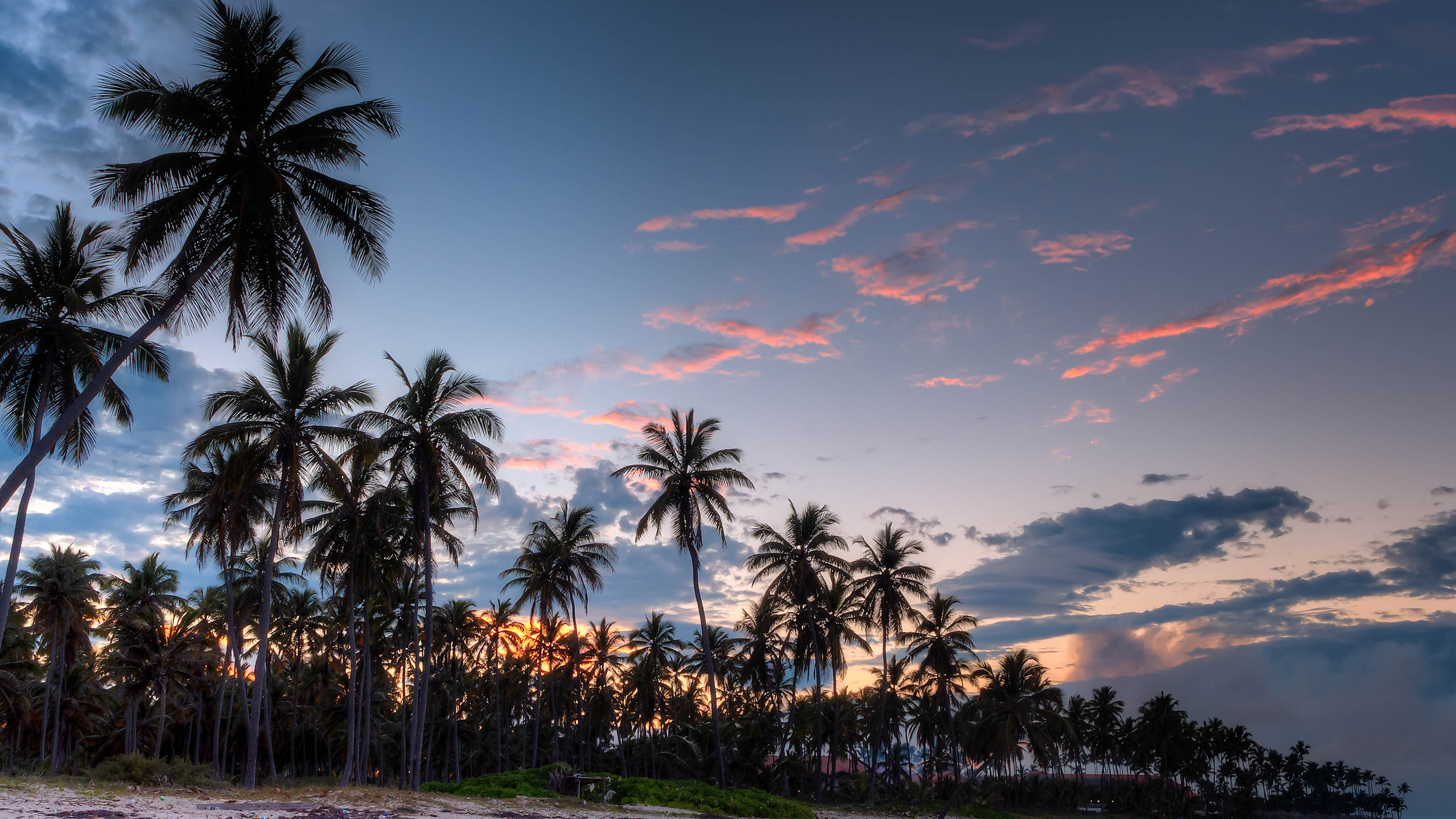 Green coconut trees during daytime photo