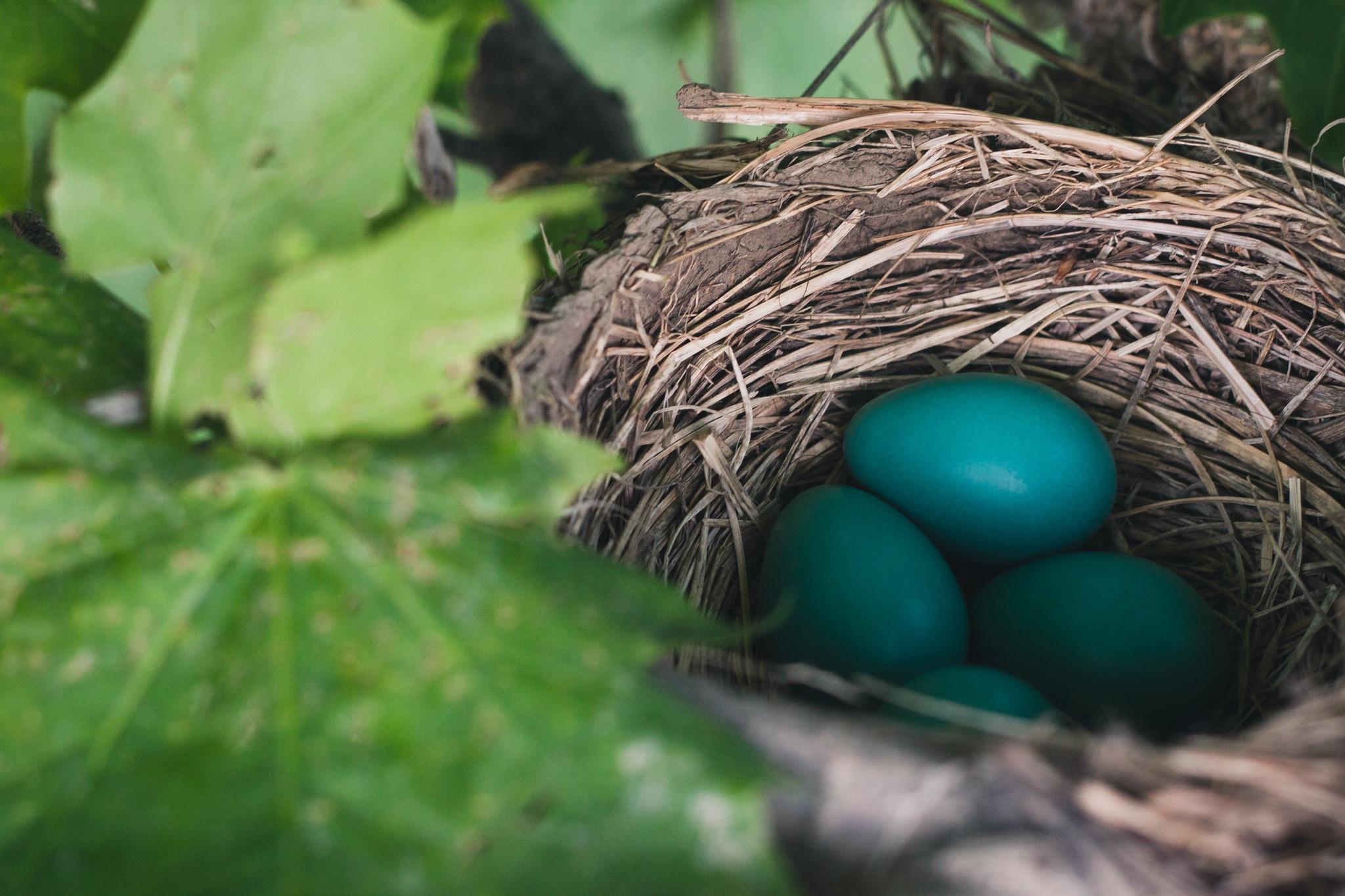 Green eggs, Bird, Birth, Cycle, Egg, HQ Photo