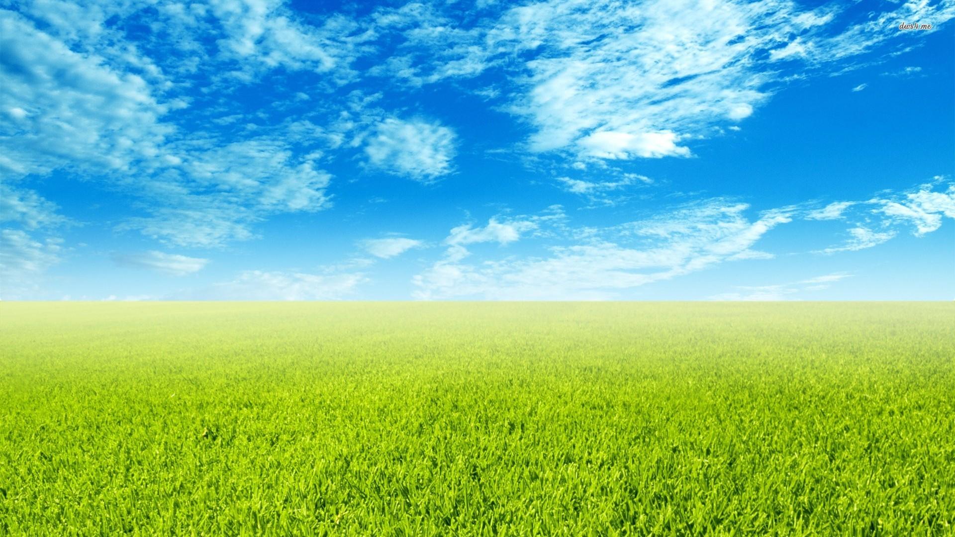 Free Photo: Green Field