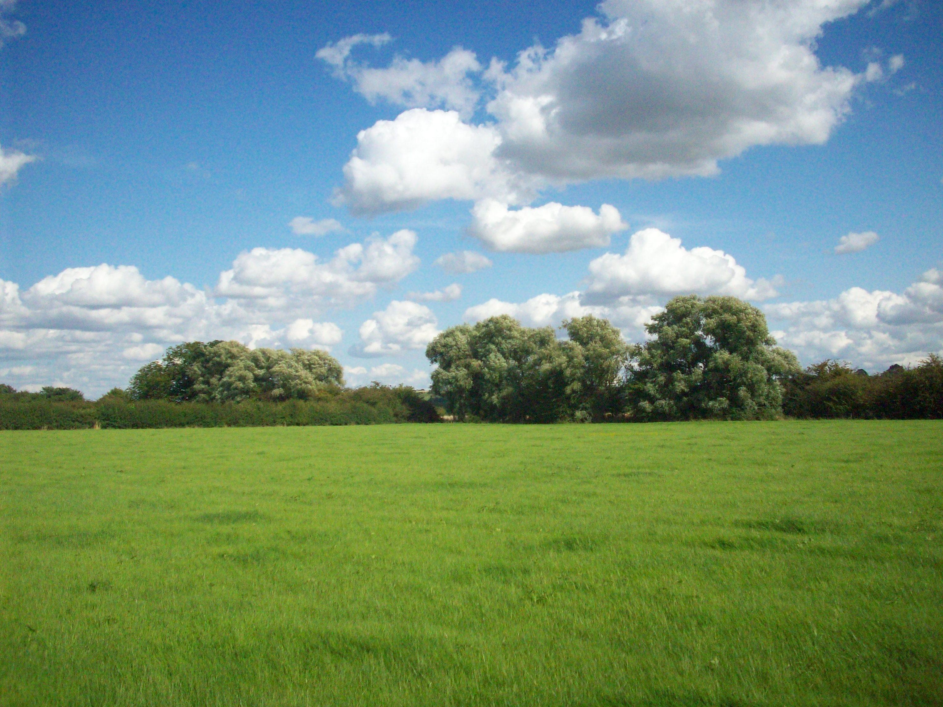 Grass: Summers Green Grass Field Wallpapers for HD 16:9 High ...