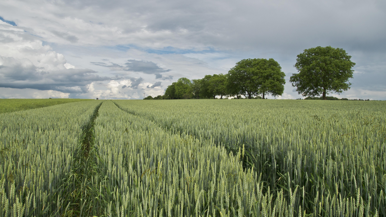 Green Field Near Three, Clouds, Landscape, Nature, Plants, HQ Photo