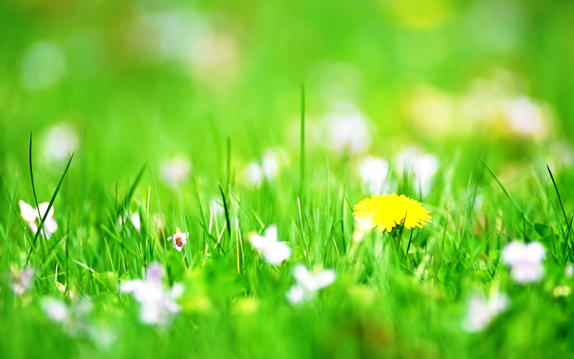 Green flower photo