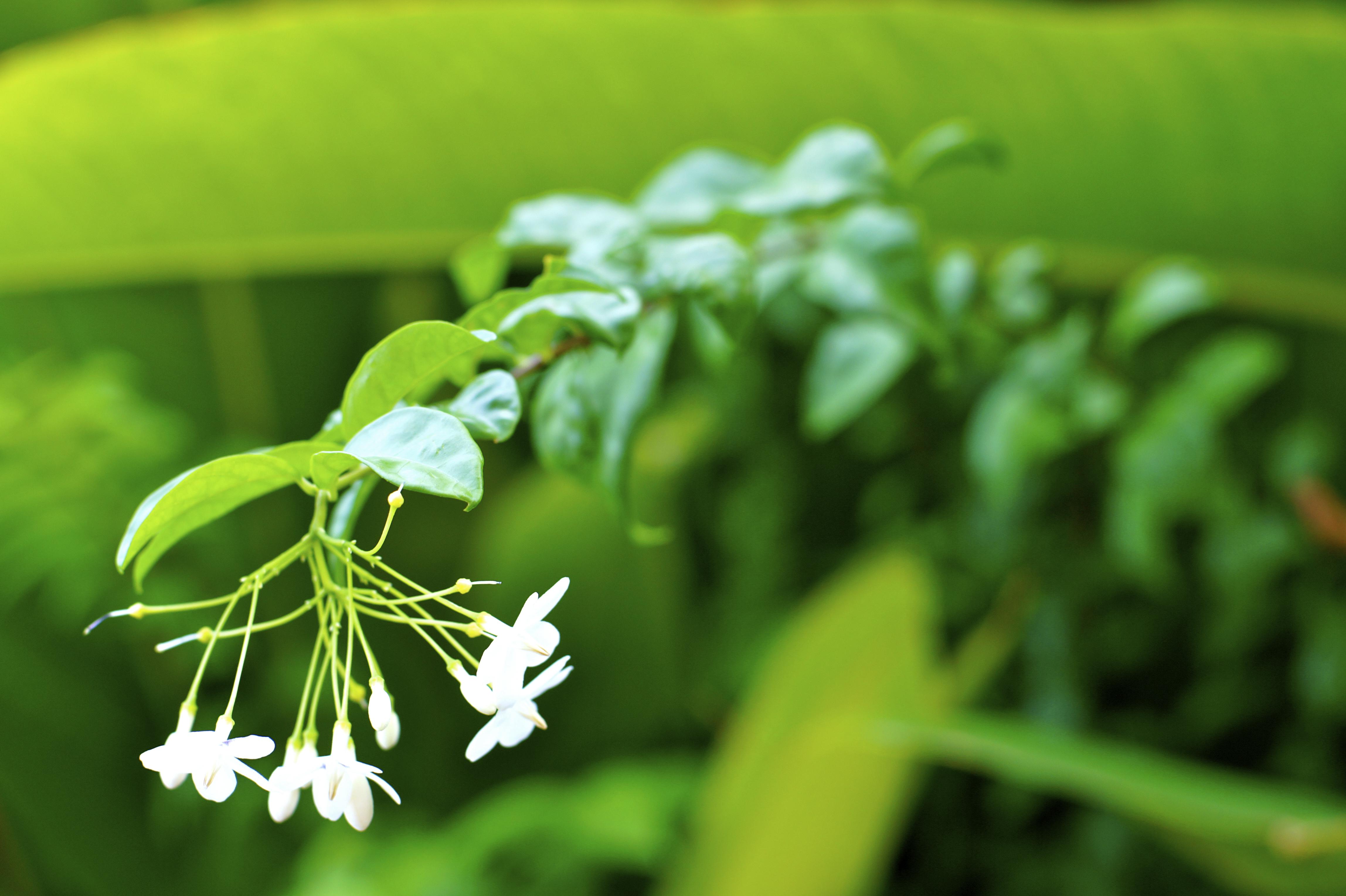 Green flower, Bloom, Flower, Green, Nature, HQ Photo