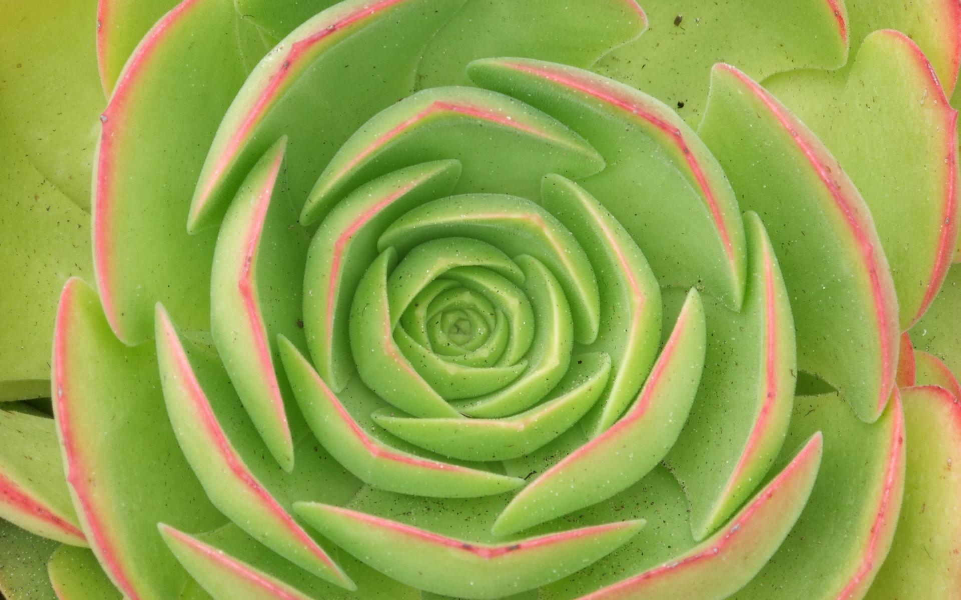 Green Flower Background #6993073