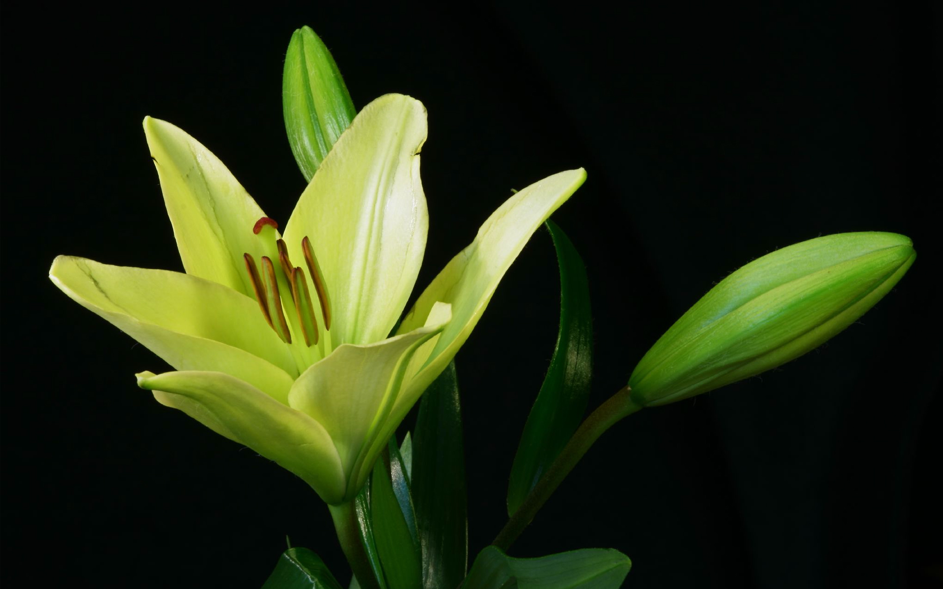Green Flower Backgrounds #6967651