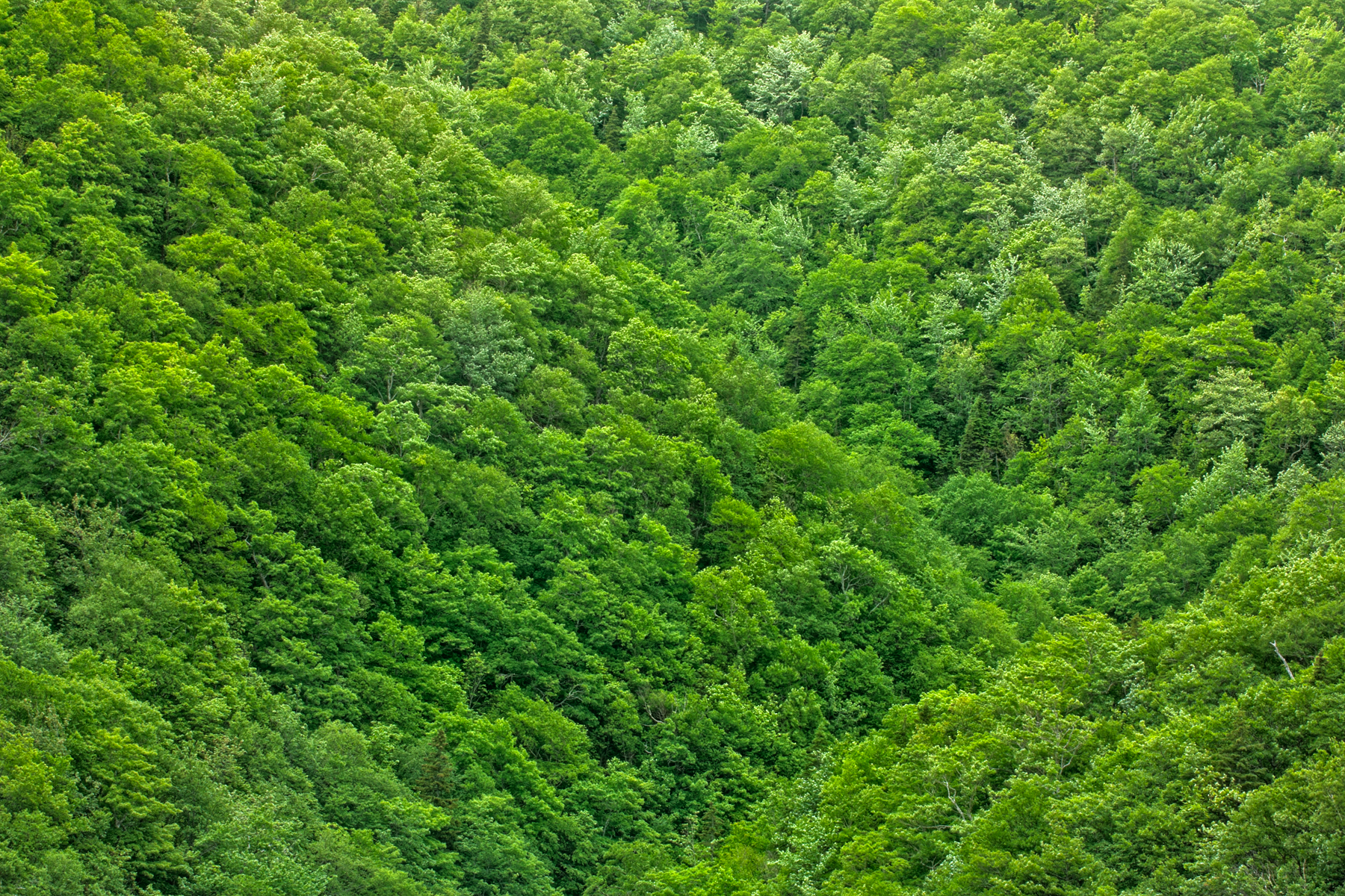 Green Foliage Texture - HDR, Angle, Somadjinn, Photograph, Picture, HQ Photo