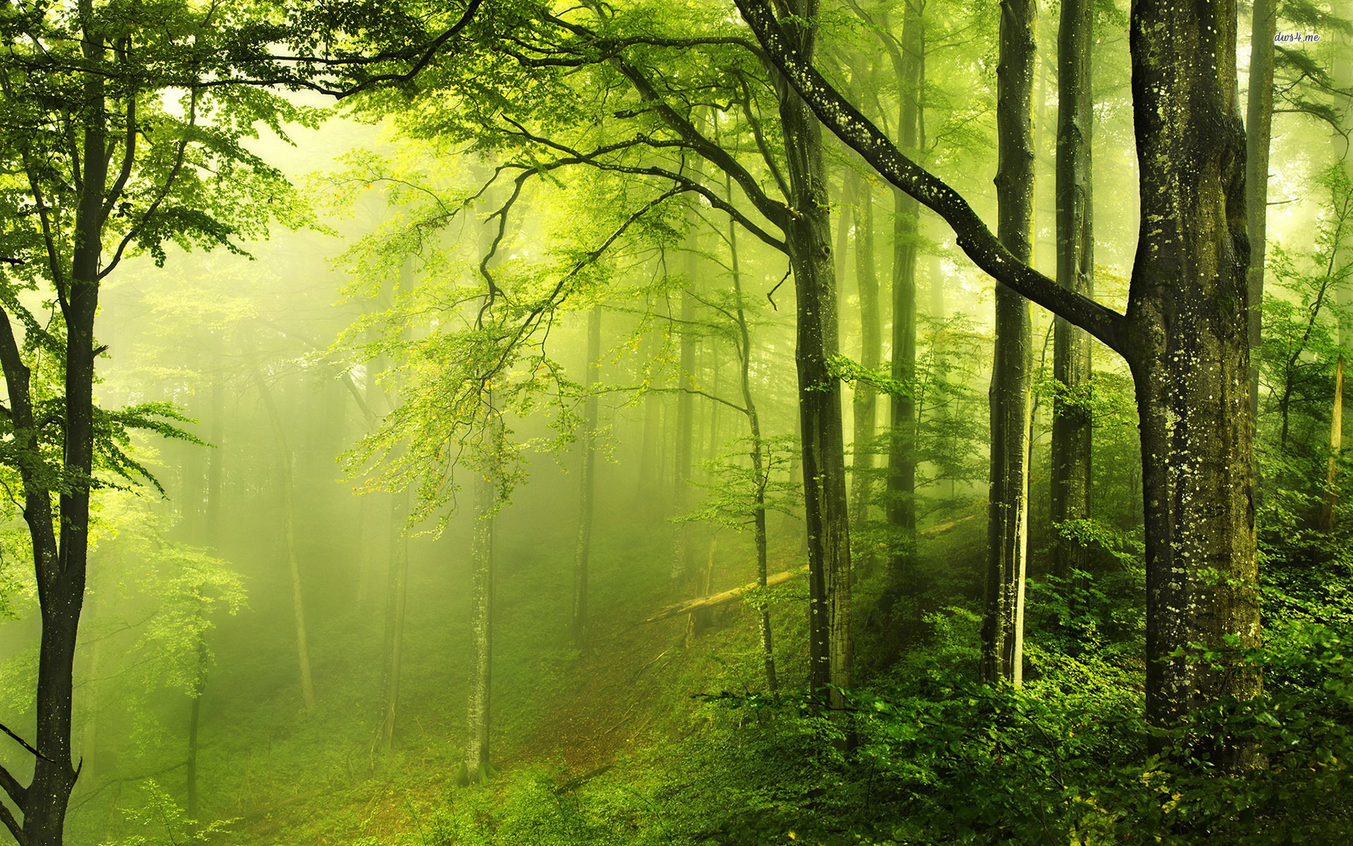 Beautiful Green Forest Nature Wallpaper Deskto #5336 Wallpaper ...