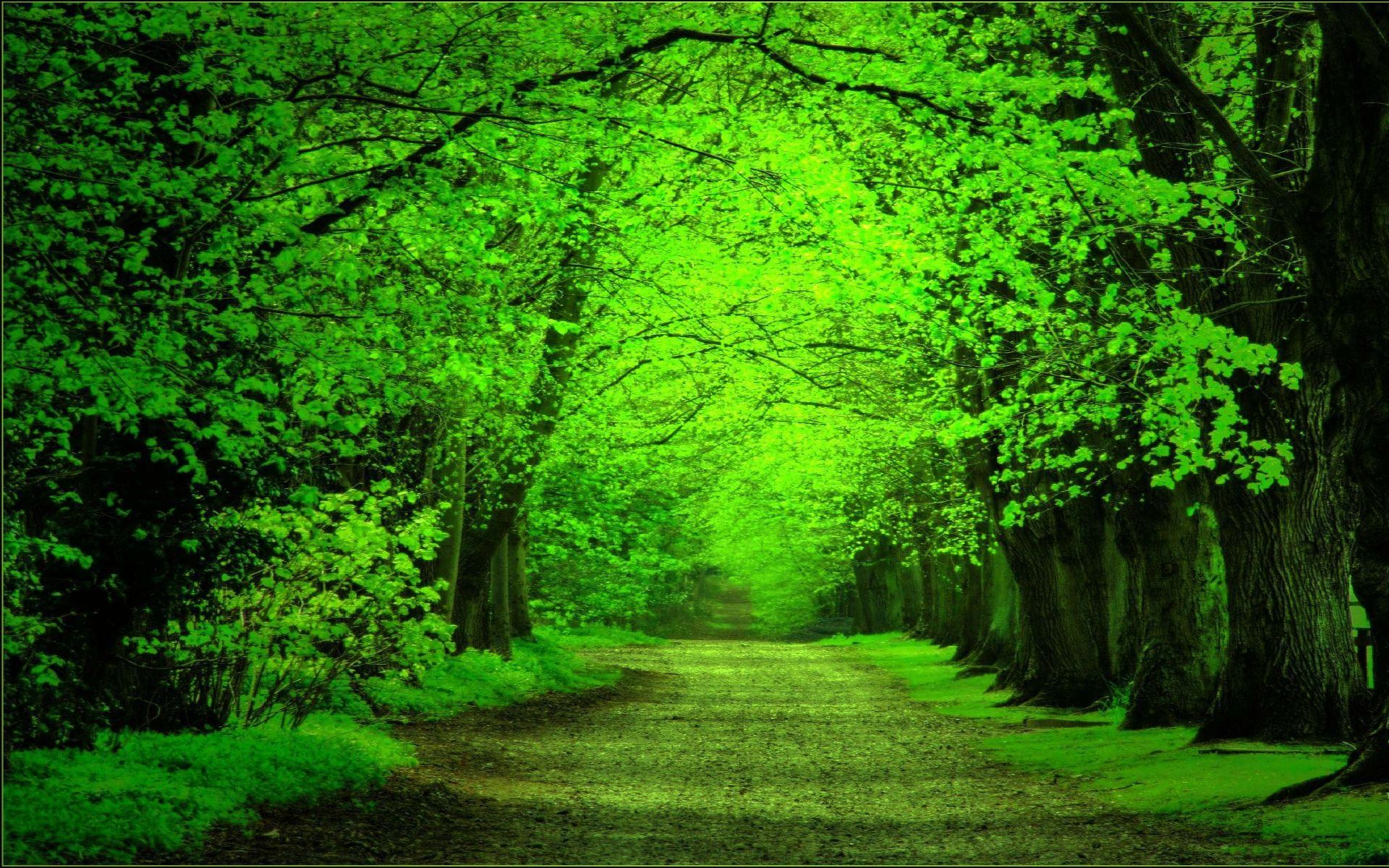 wallpaper green forest 005498ebfbffacf5fa96fe6977653c33 - Top ...