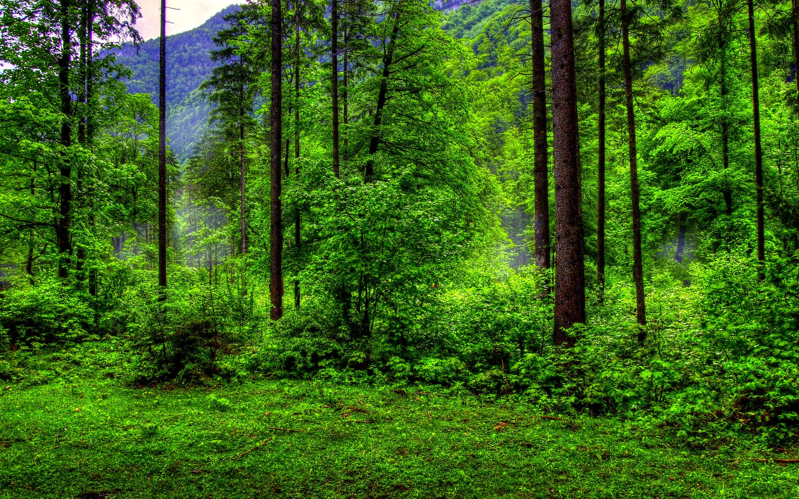 Greenforest Wallpaper Picture Hd Pics Green Forest Background For ...