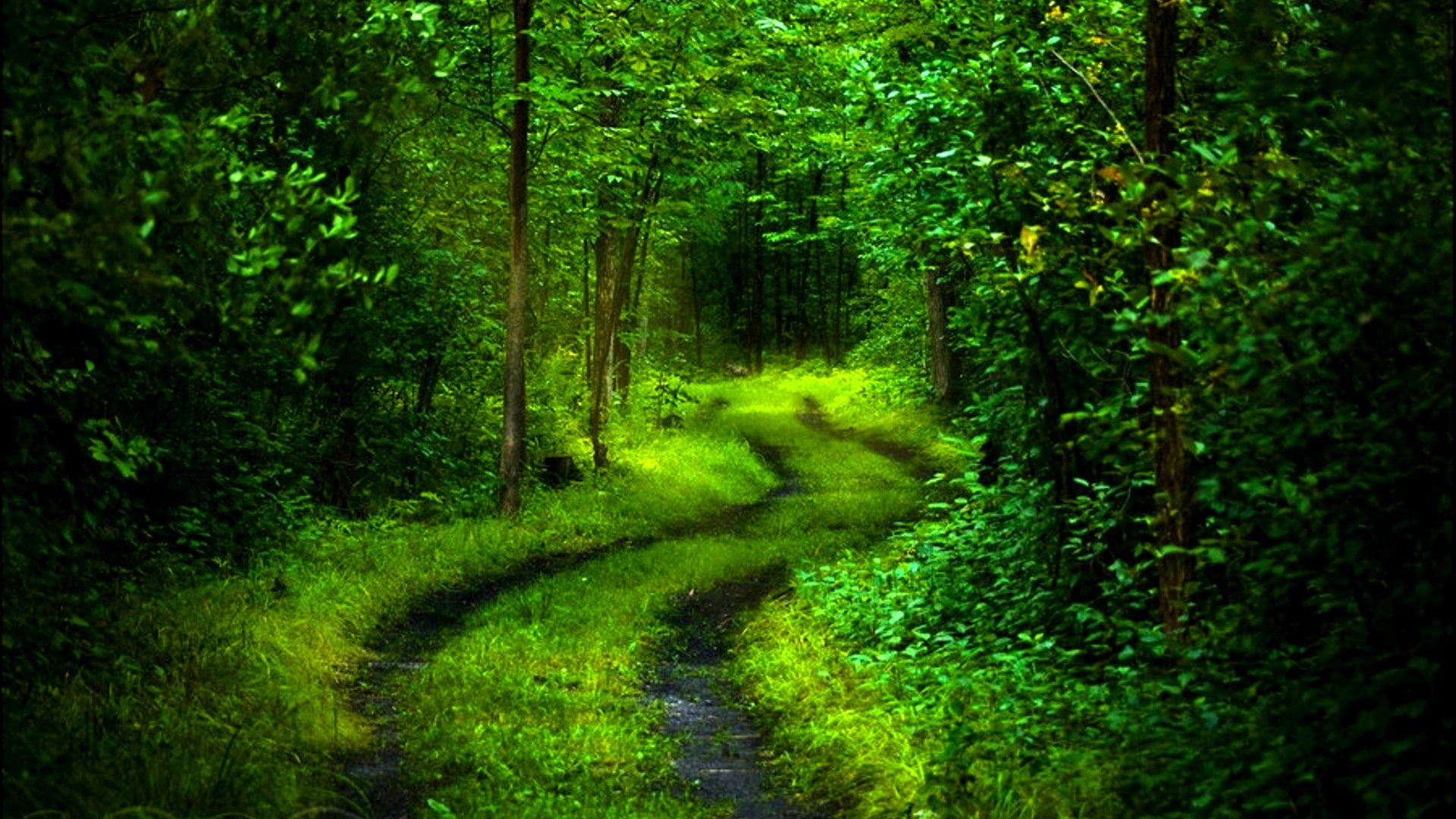 Forests: Green Forest Deep Path HD 3D Wallpaper for HD 16:9 High ...