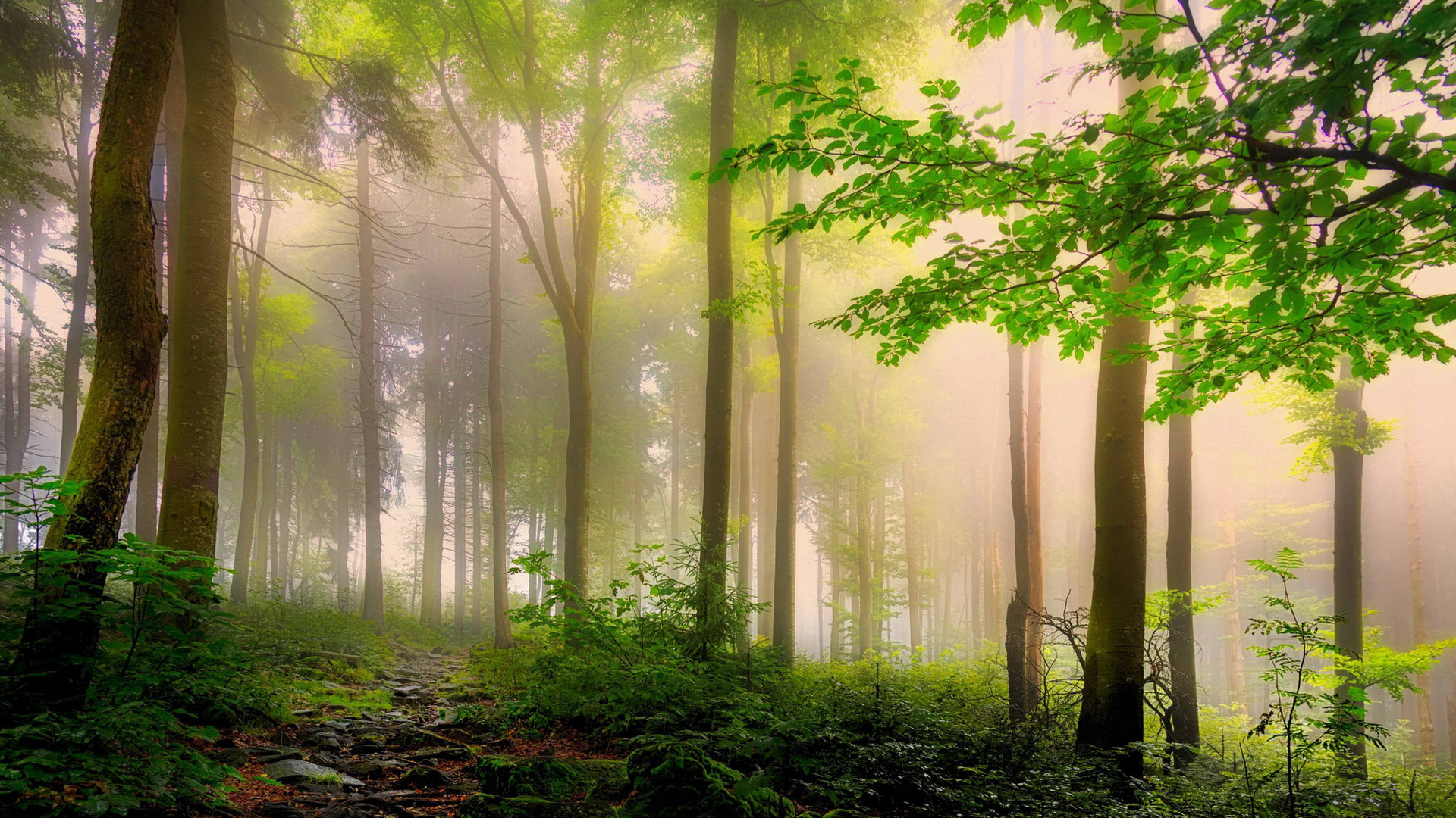 Impossible green forest / 1920 x 1080 / Forest / Photography ...